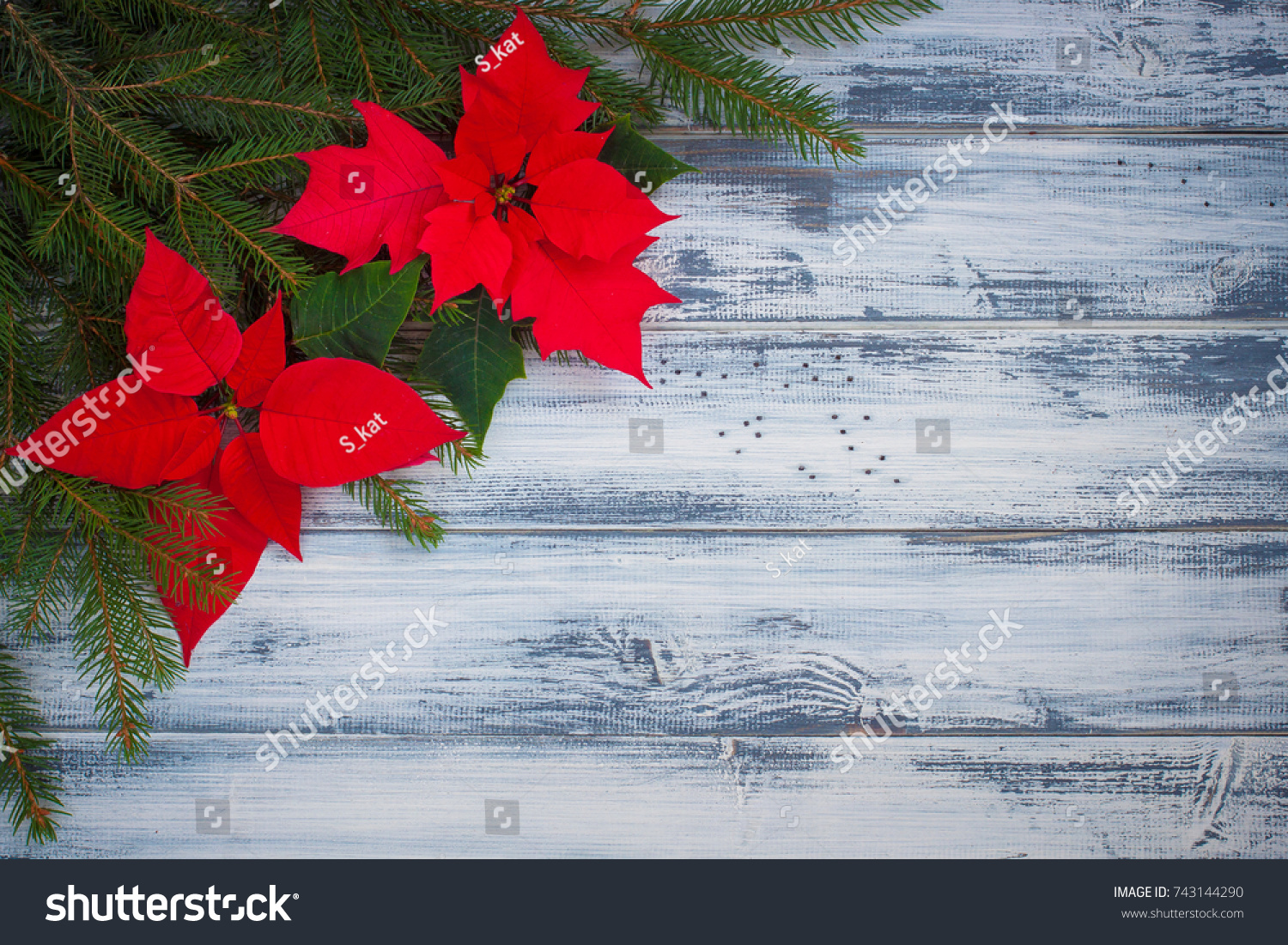 Red Poinsettia And Snow Christmas Flower On Wooden Background Ez