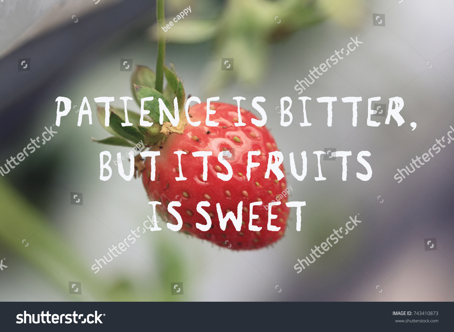 Life Inspirational Quotes Life Inspirational Quotes Patience Bitter Fruit Stock Photo