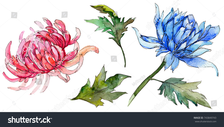 Wildflower chrysanthemum flower watercolor style isolated stock wildflower chrysanthemum flower in a watercolor style isolated full name of the plant golden izmirmasajfo
