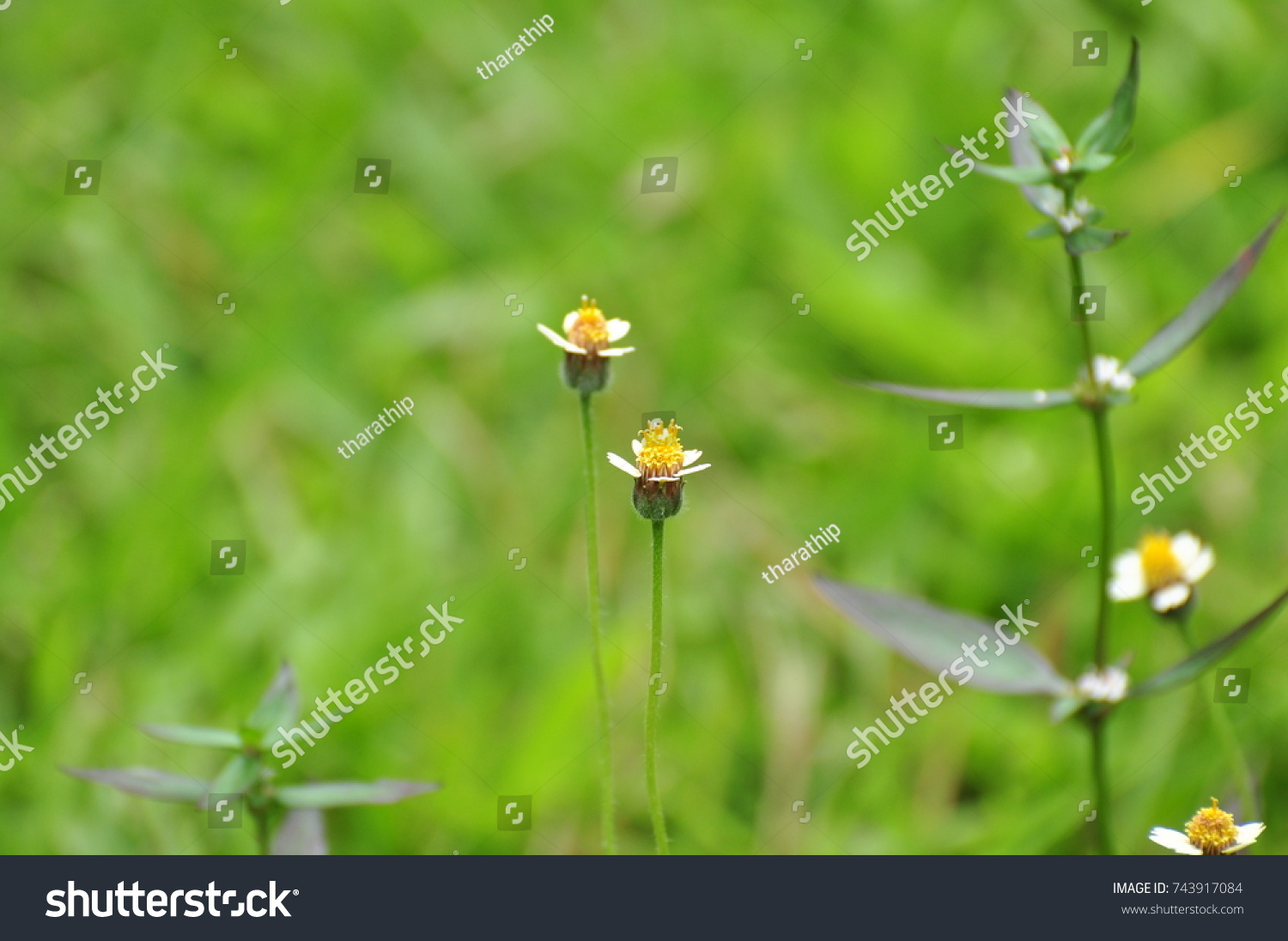 Small Flowers And Flowers Colorful Grass White Yellow Pink
