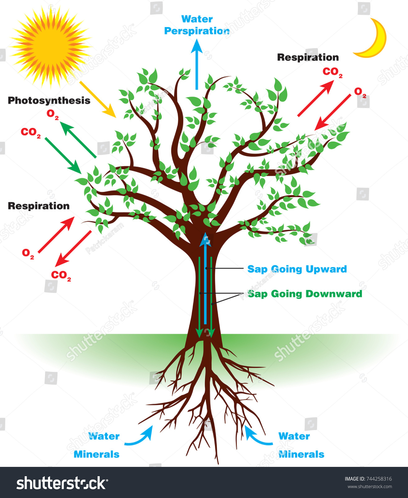 Tree Sap Diagram Wiring For You Business Database Sample Process Diagrams Schema