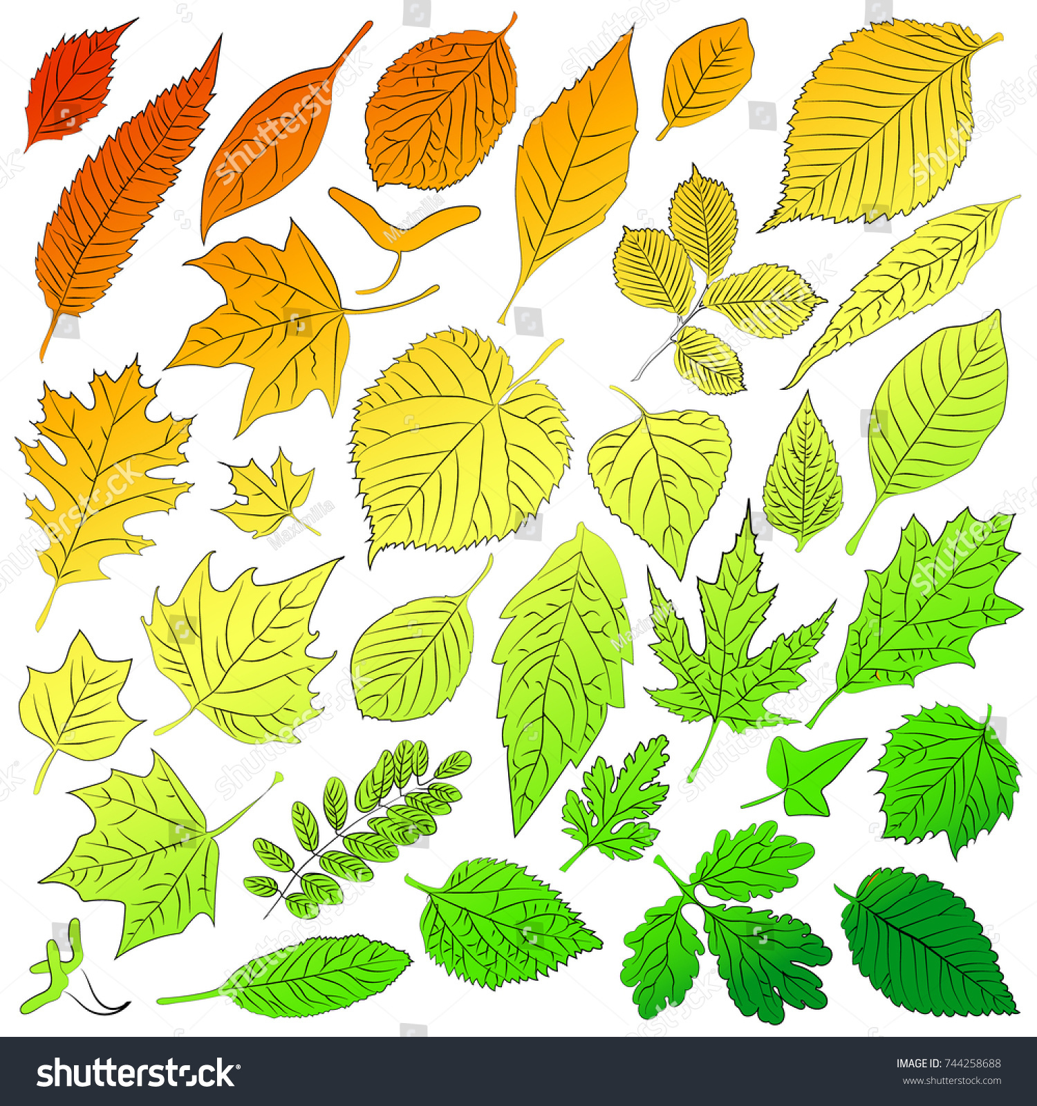 Multicolored Leaves Autumn Trees Time Vector Stock Vector 744258688 ...
