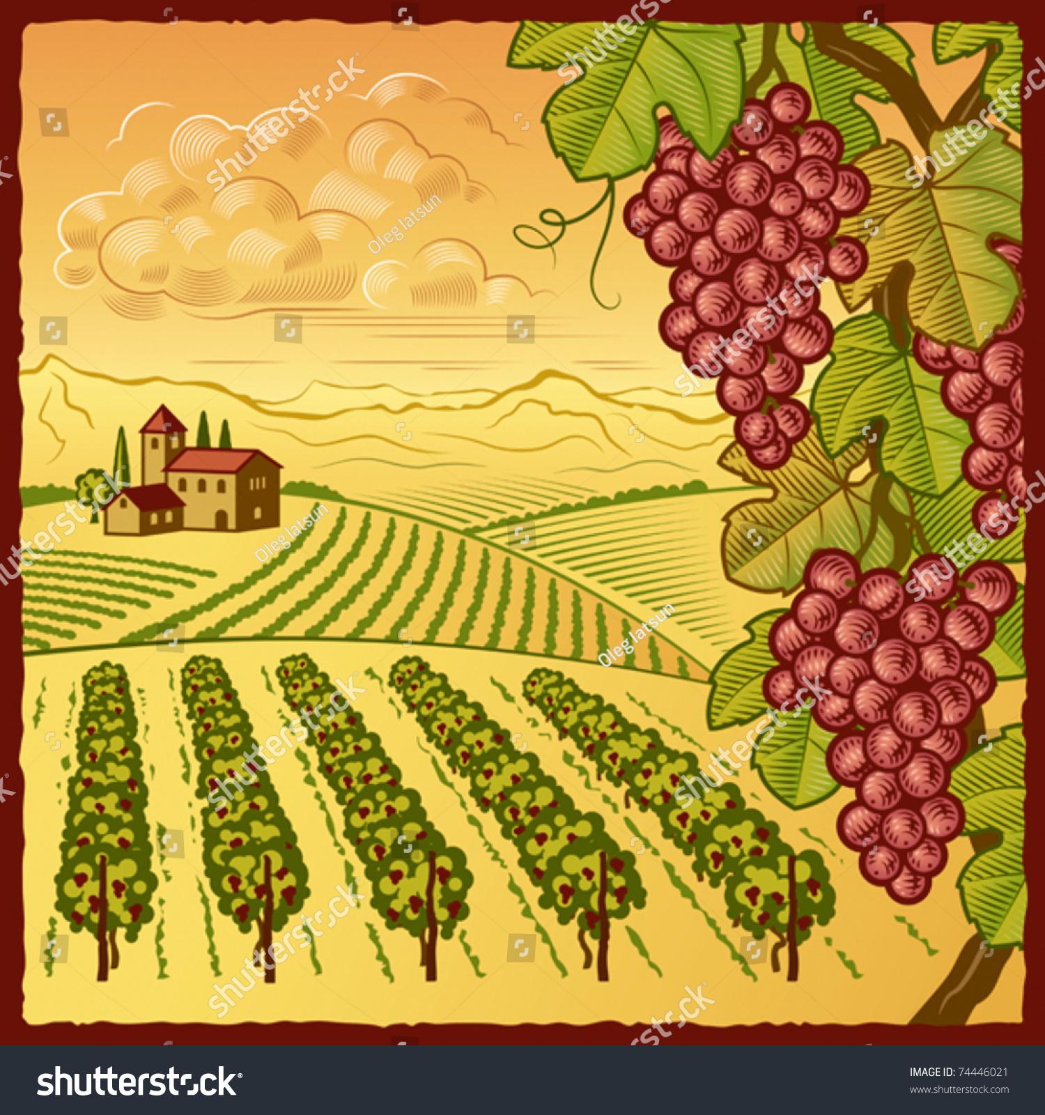 Vineyard Vectors, Photos and PSD files | Free Download