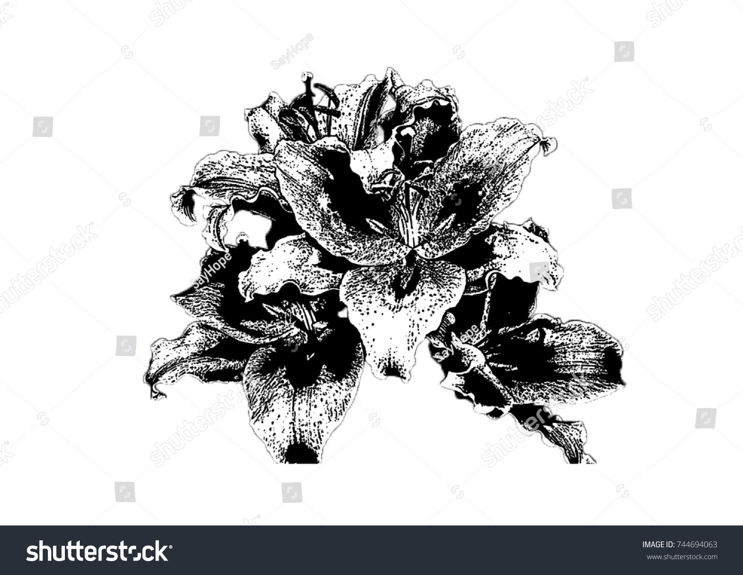 Sketch lily flower stock illustration royalty free stock sketch of a lily flower izmirmasajfo