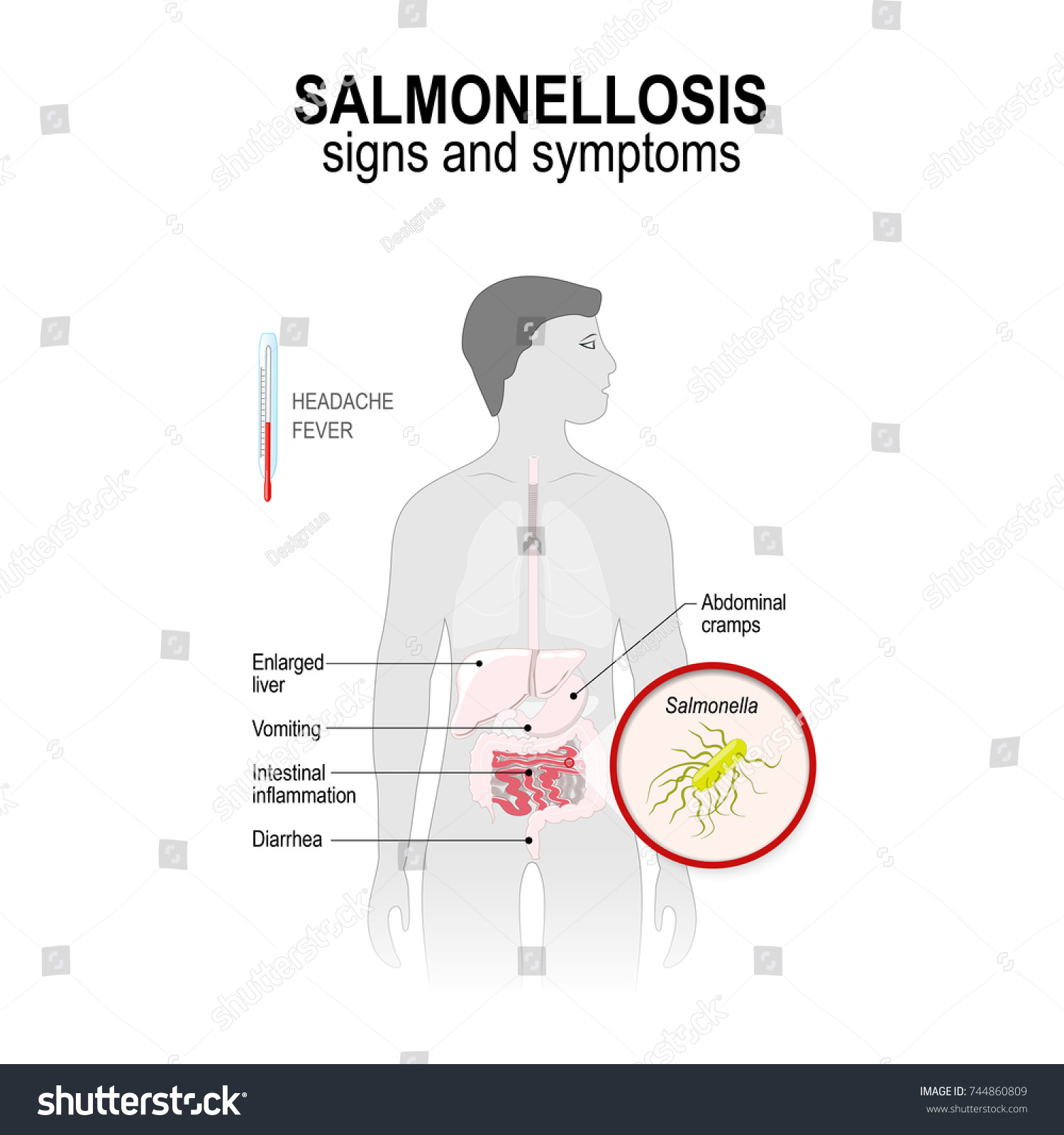 Salmonellosis Signs Symptoms Man Silhouette Highlighted Stock Vector