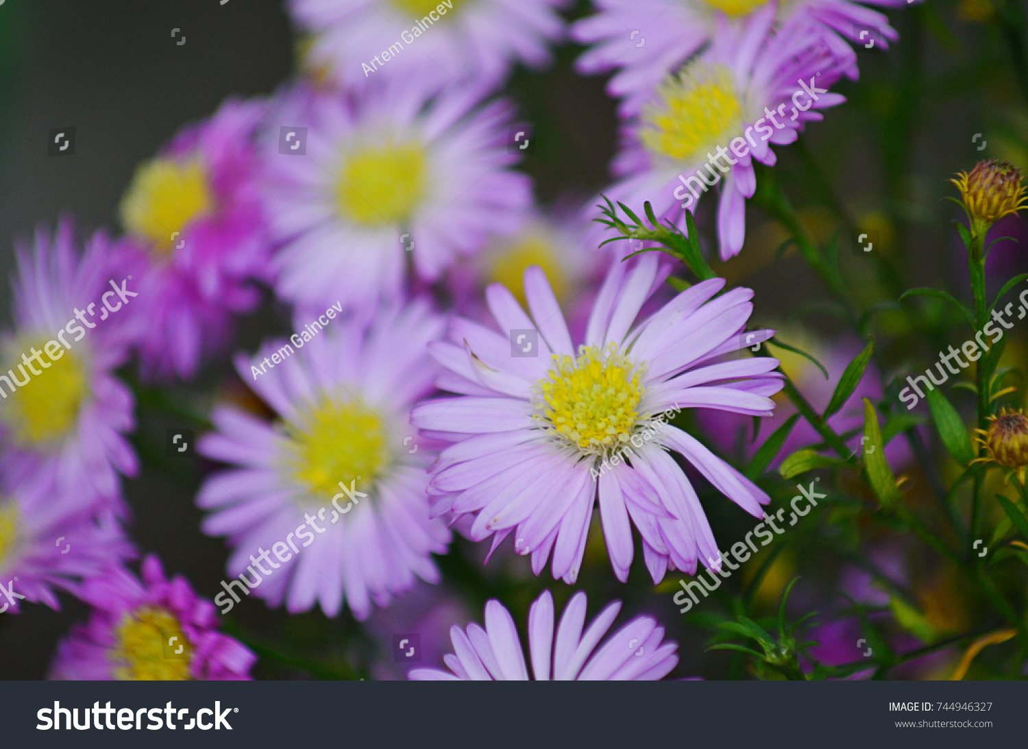 Purple Flowers The Flowers Of The Field Plants With Green Stem And