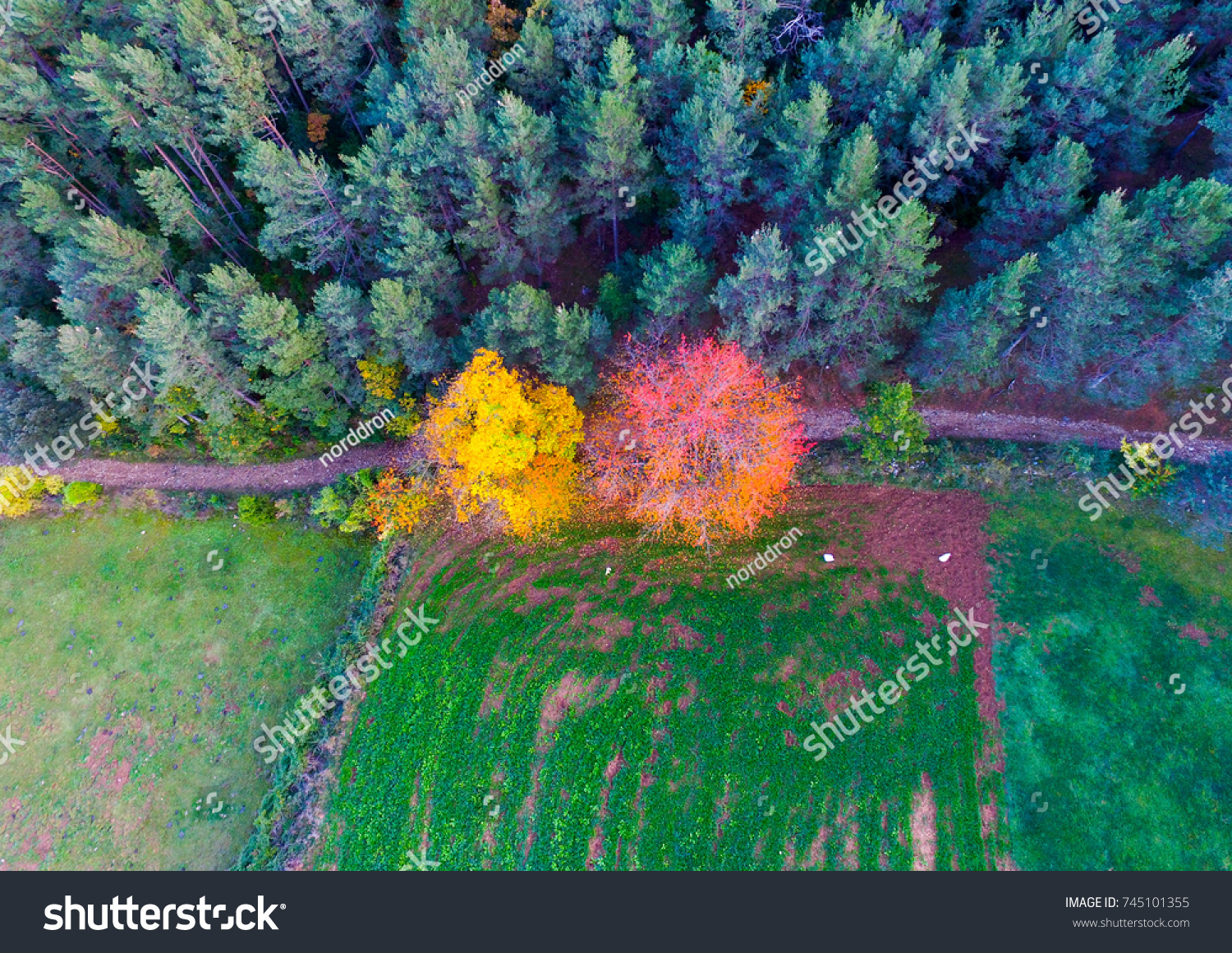 Aerial Cenital Drone View Autumn Forest Stock Photo (Safe to Use ...