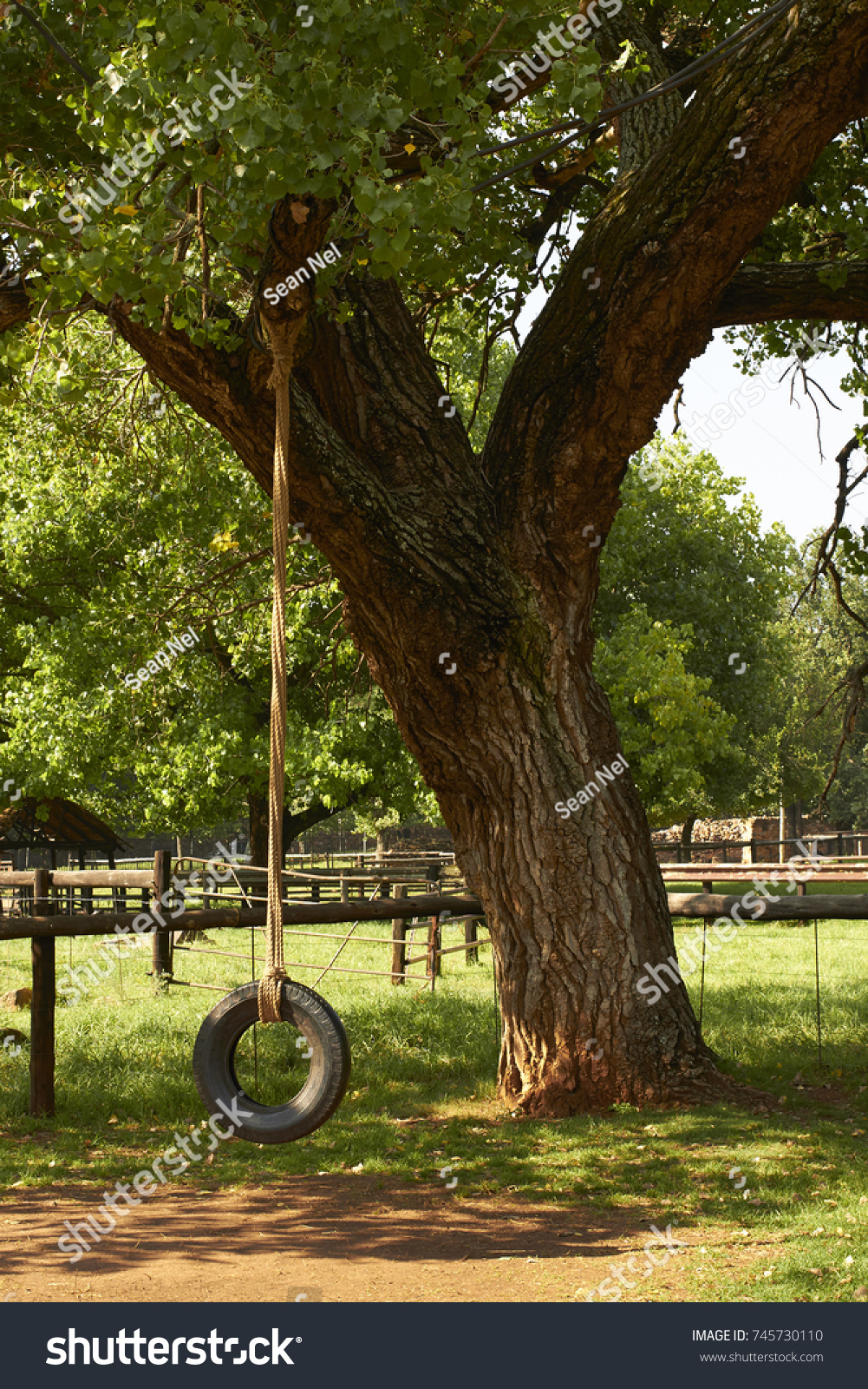 Old style tire swing hanging from a