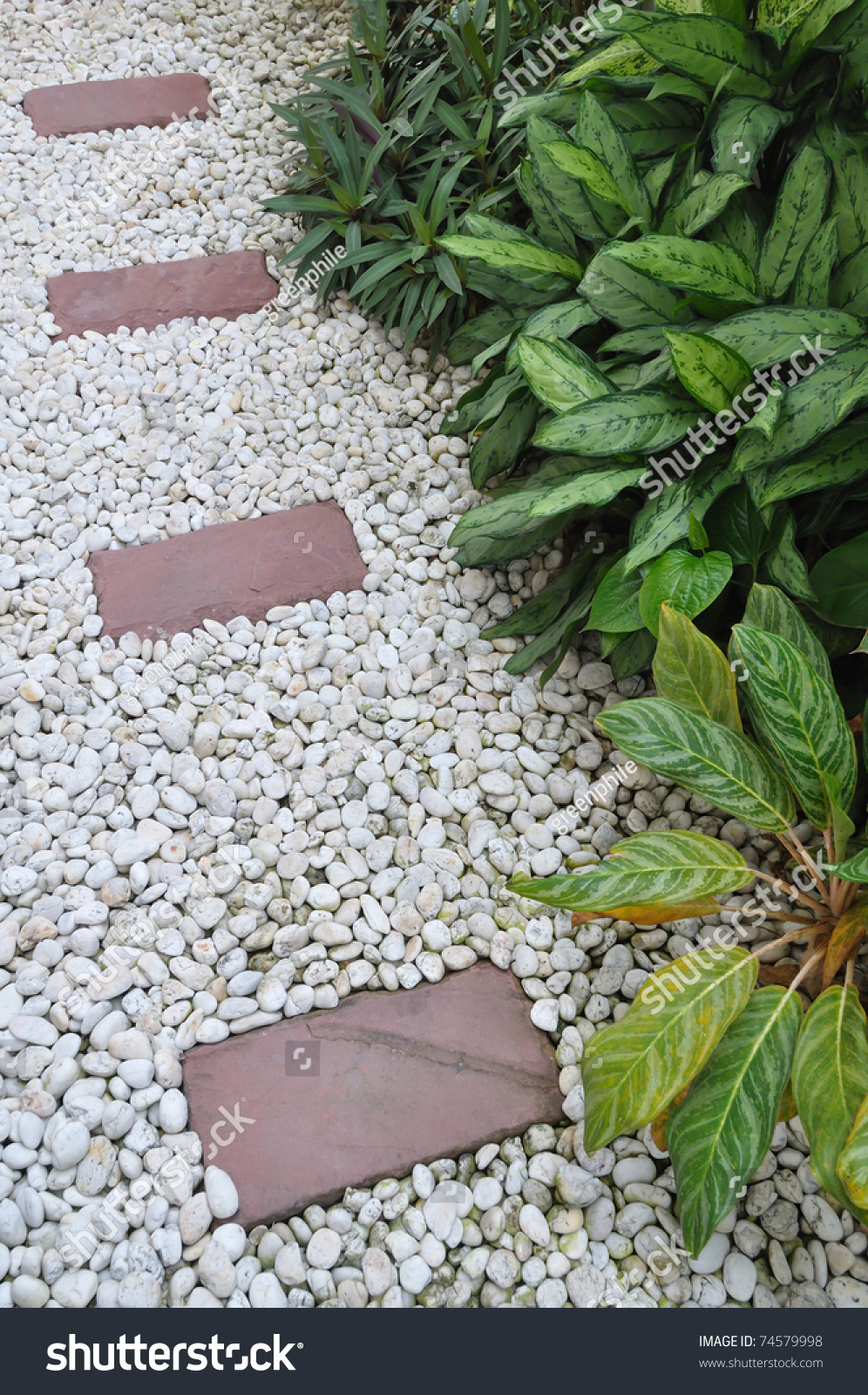 Decoration Plant Stone Garden Stock Photo 74579998 - Shutterstock