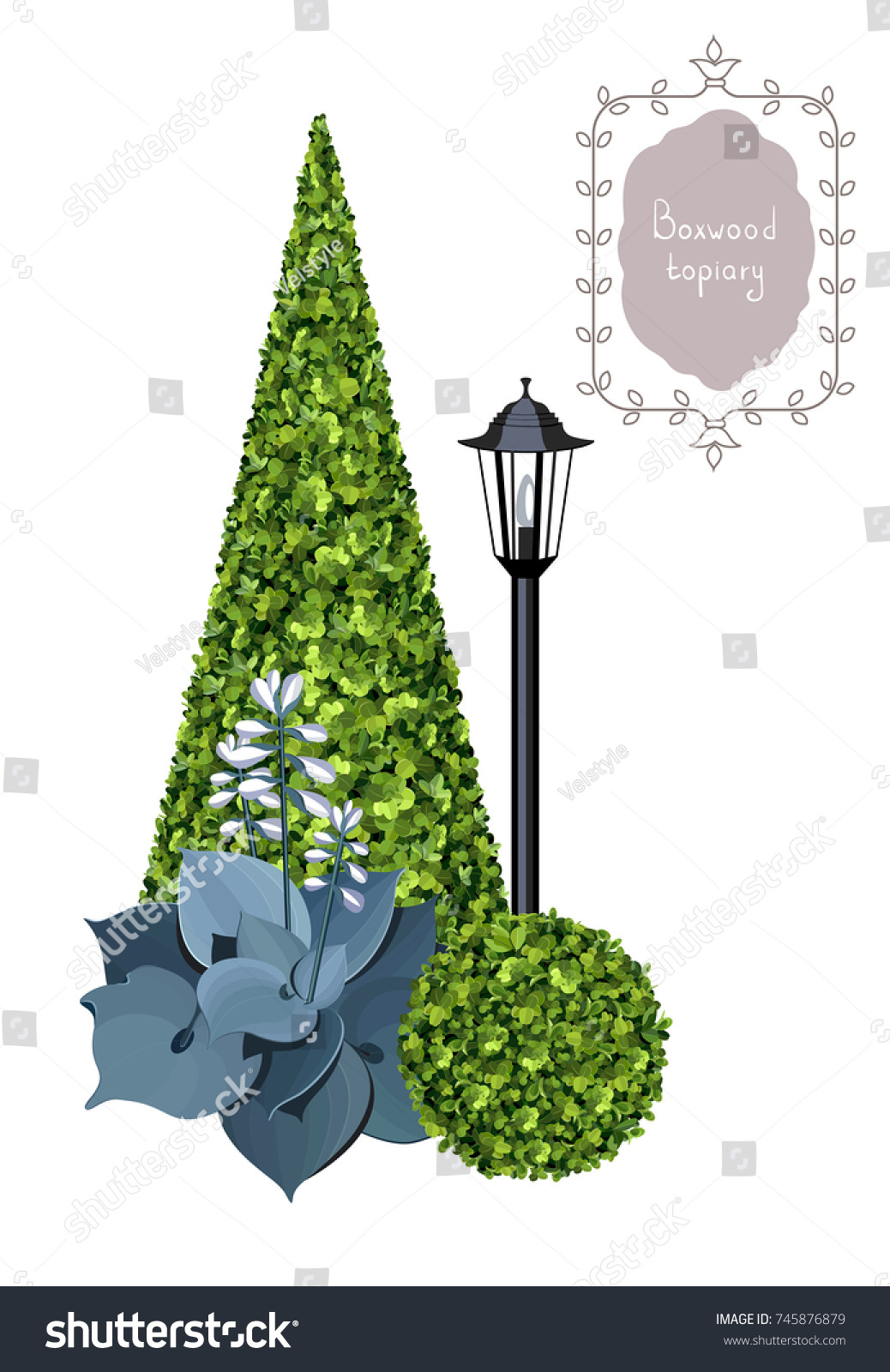 Boxwood Topiary Streetlight Hosta Plant Leaves Stock Vector ... on english garden landscape design ideas, camellia garden, english rose garden, english lavender garden, pink and white landscape garden, hydrangea garden, carnations garden, english laurel garden, magnolia garden, english heather garden, flower border around vegetable garden, iris garden, english ivy garden, lilac garden, gardenia garden,