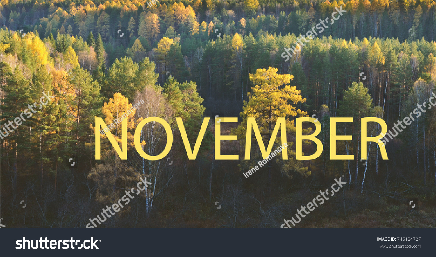 Hello November. Autumn Landscape Panorama Of A Scenic Forest.