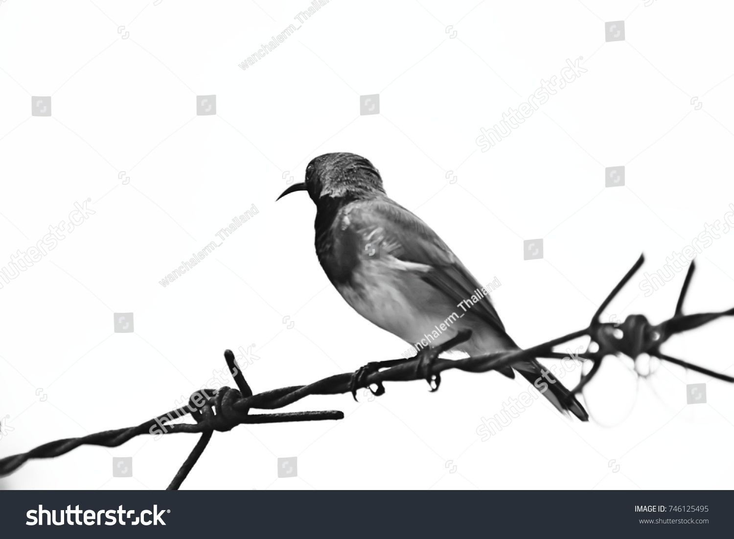 Silhouette Small Bird Perched On Strand Stock Photo 746125495 ...