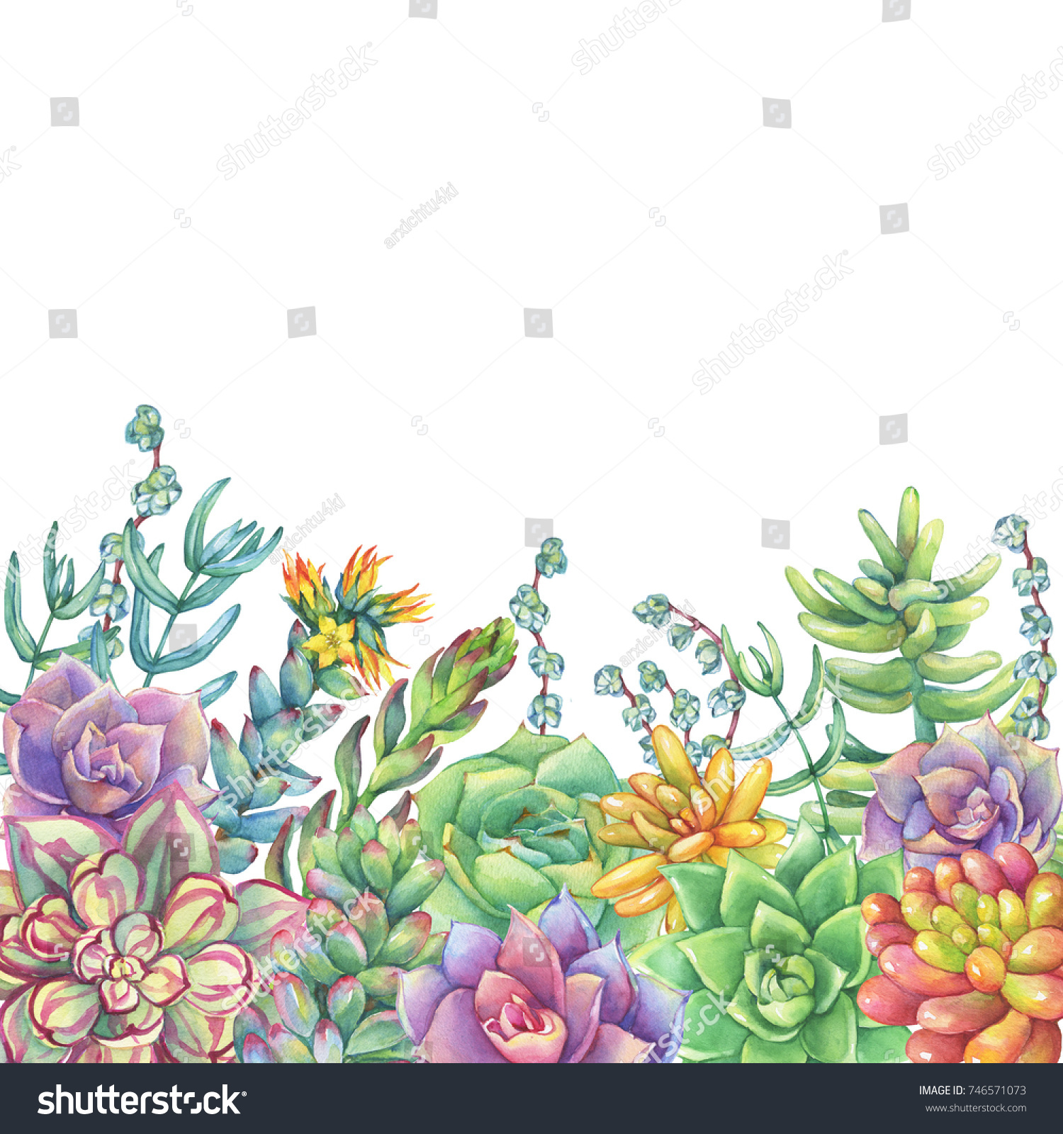 Border Leaves Succulent Cactus Succulents Collection Stock Illustration 746571073