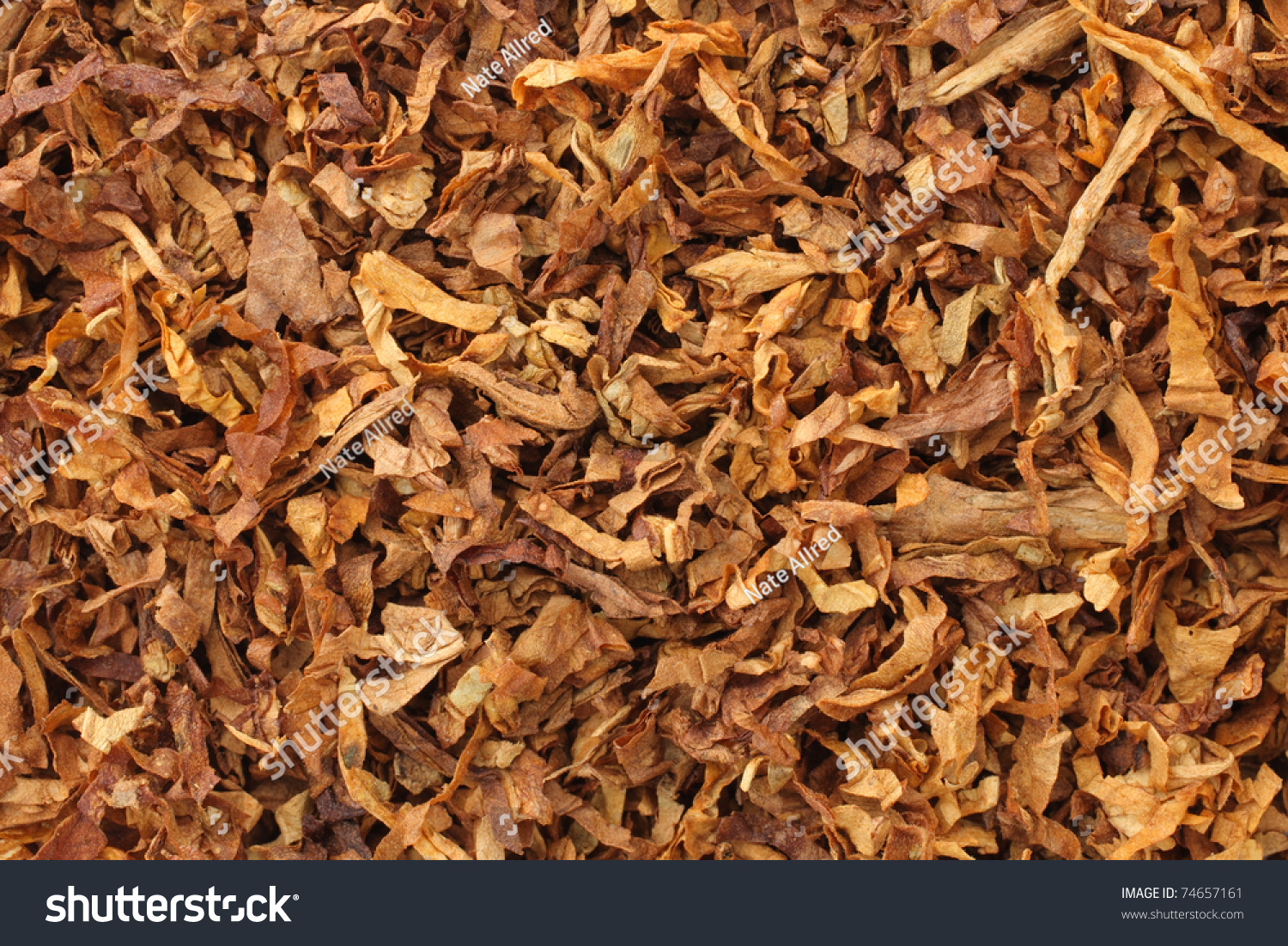 the feasibility of dried tobacco leaves Tobacco is an age old, yet amazing plant, which has become increasingly popular among hobbyist in recent times perhaps it is a distraction from daily stresses and allows an escape to simpler times.