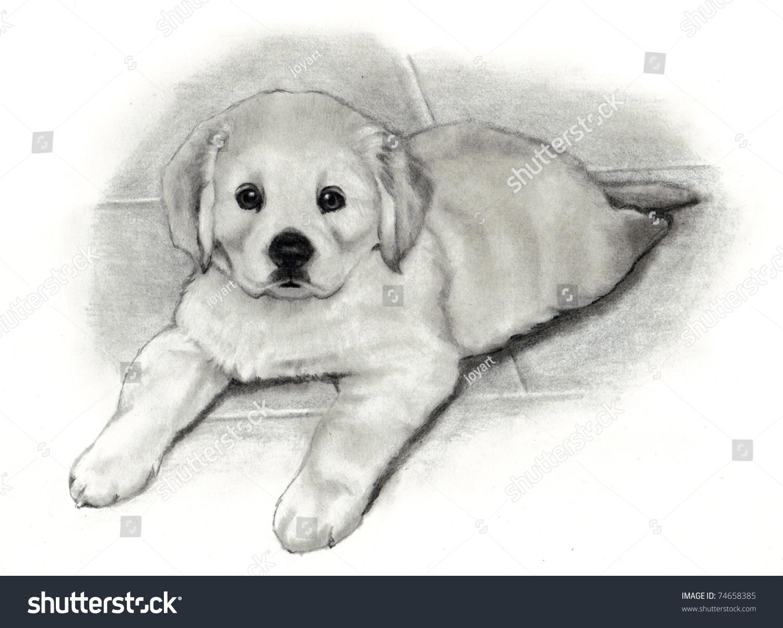Uncategorized Golden Retriever Drawings pencil drawing golden retriever puppy stock illustration 74658385 of puppy