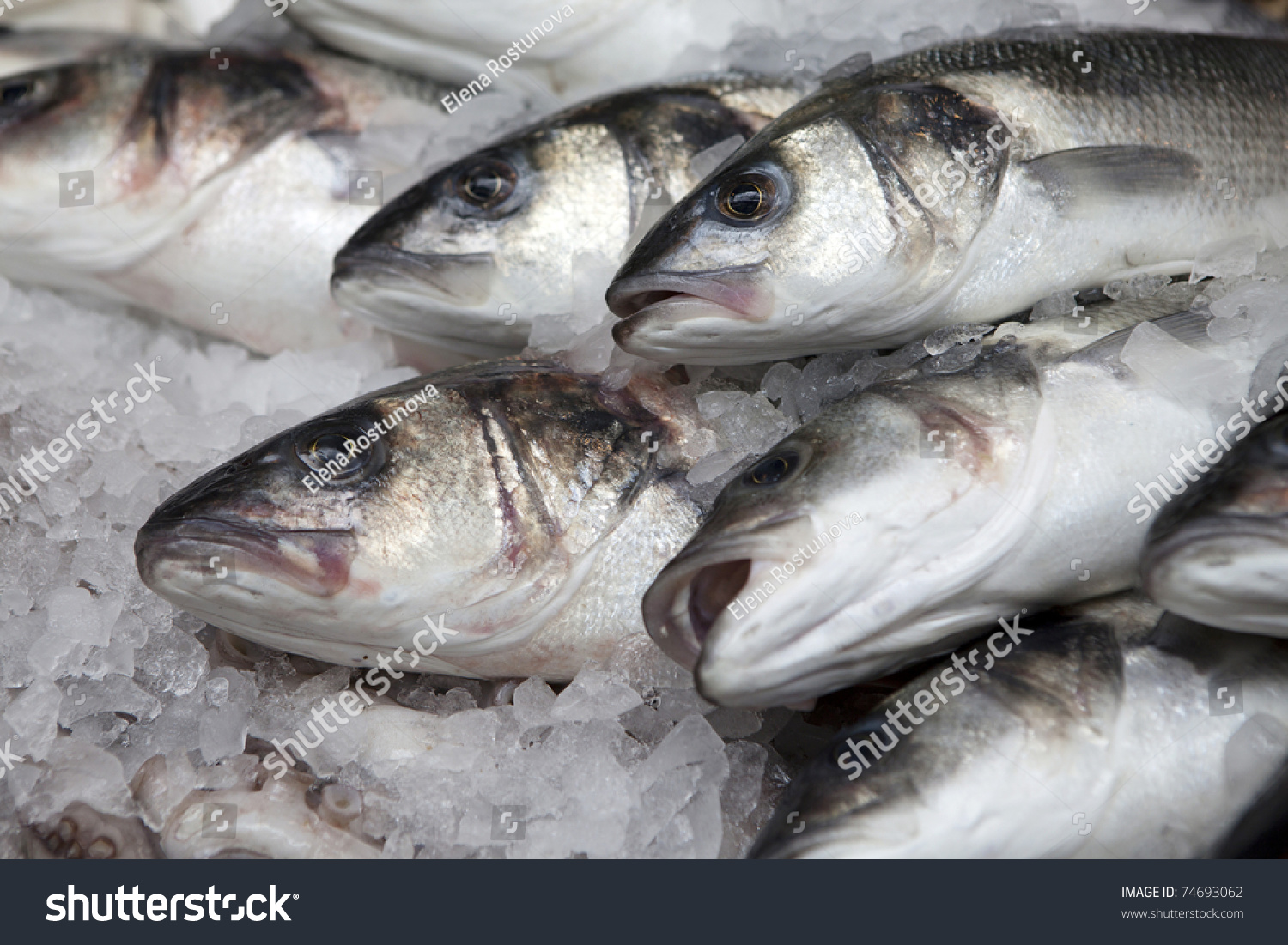 fresh fish Looking for a retail fresh fish case in milwaukee we are milwaukee's best fish house with everything from tuna to salmon, stone crab to monkfish.
