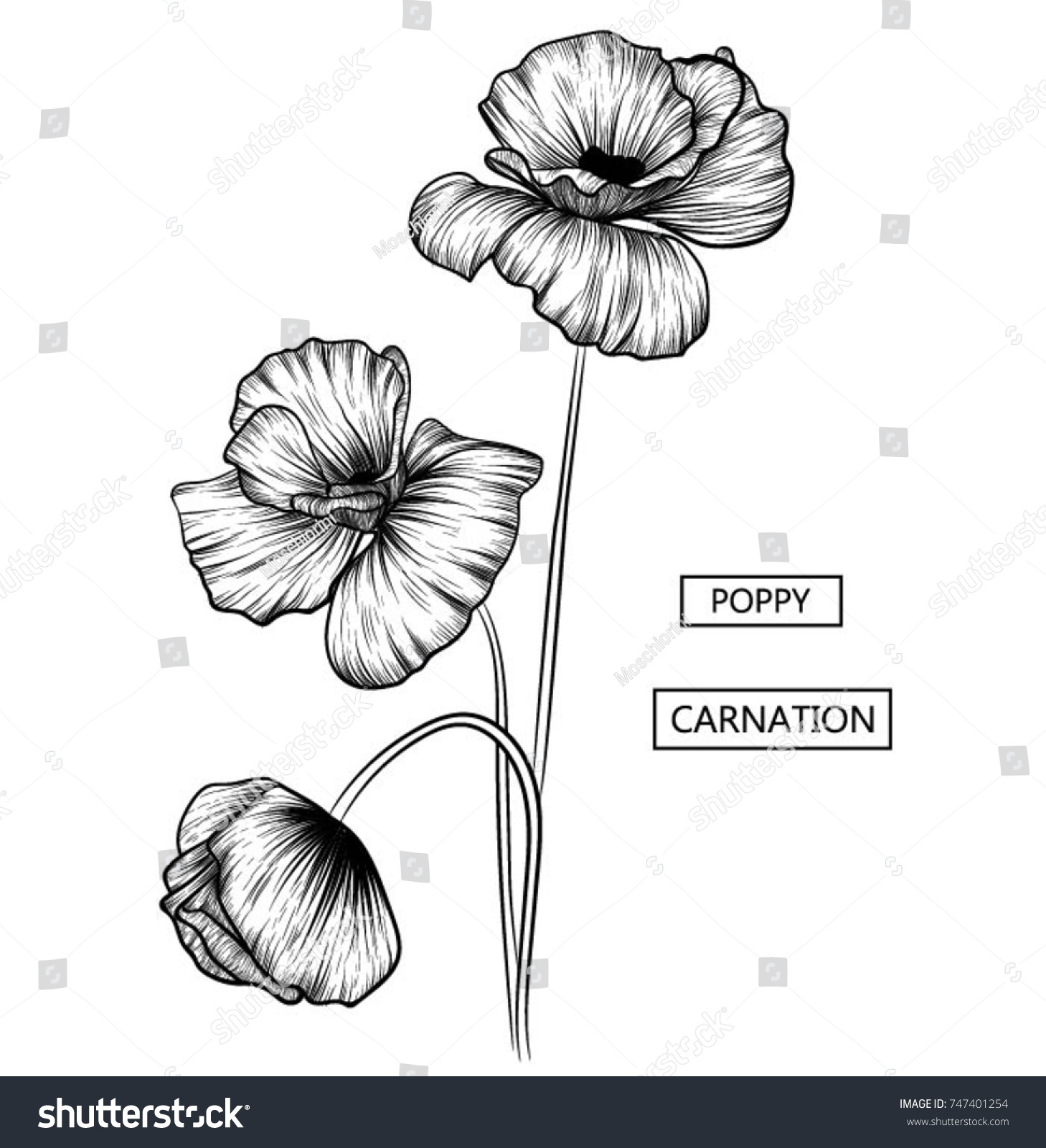 Hand Drawn Poppy Flowers Doodle Style Vector Poppy Flower Of