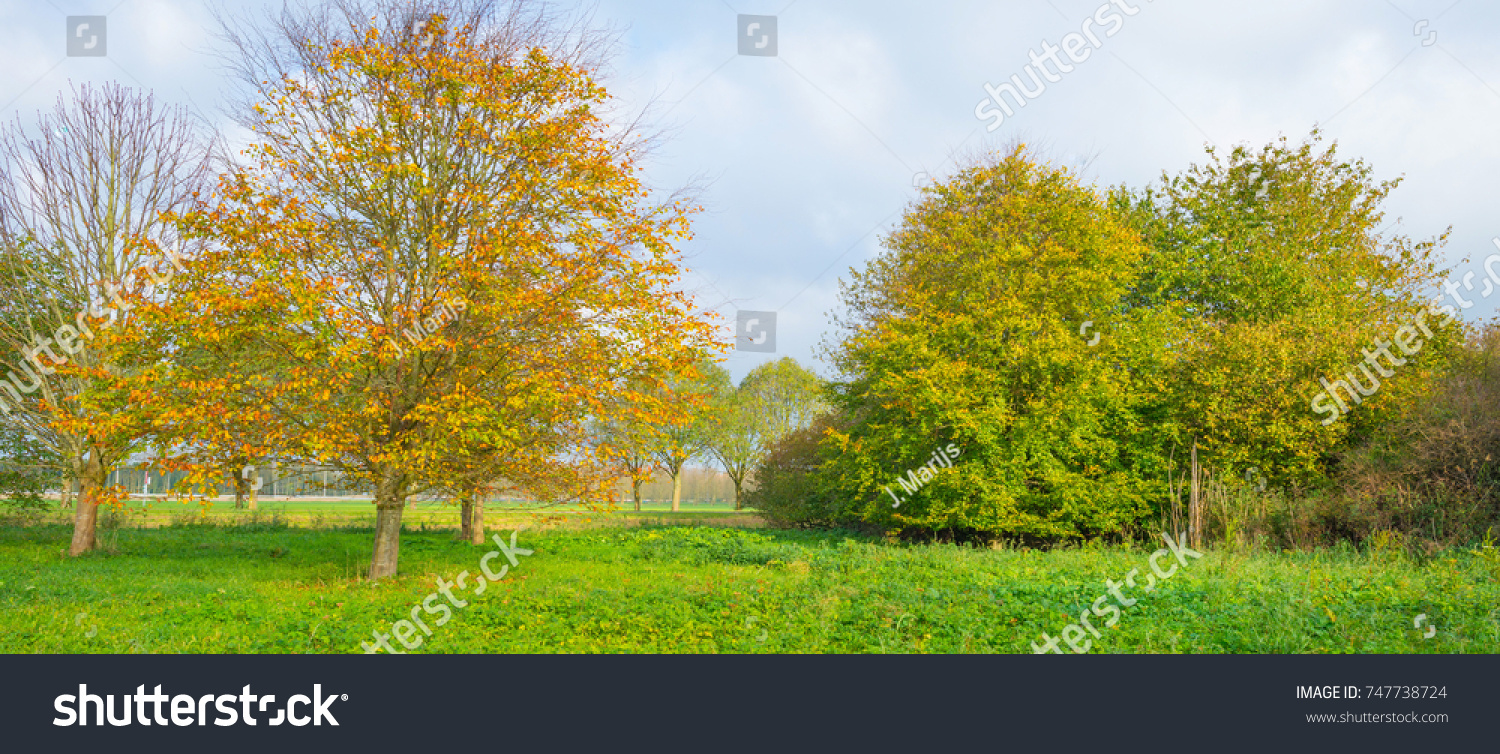 Autumn landscape with bright colorful falling leaves in Saint ...