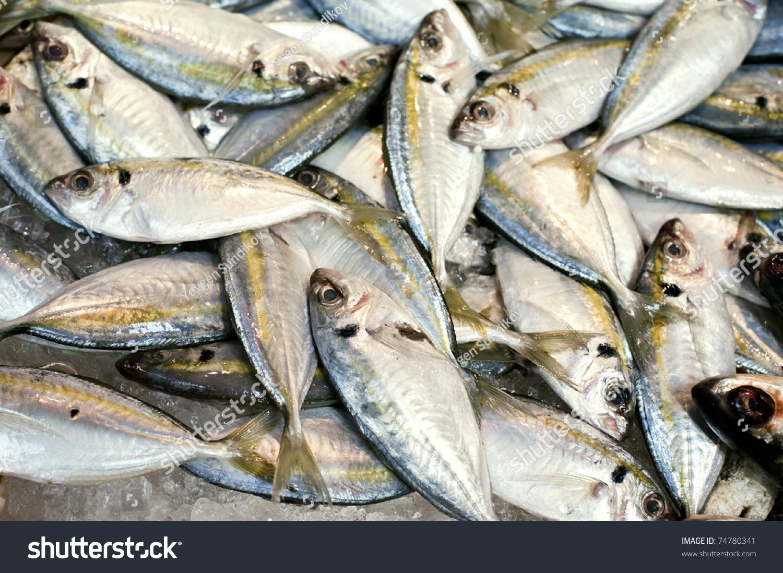 Lots Of Fish Stock Photo 74780341 Shutterstock