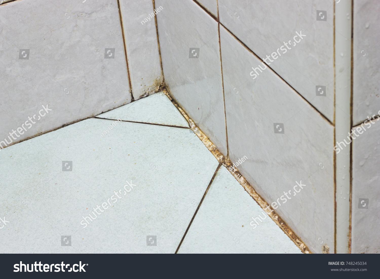 Black Mold Growing Bathroom Wall Corner Stock Photo (Royalty Free ...