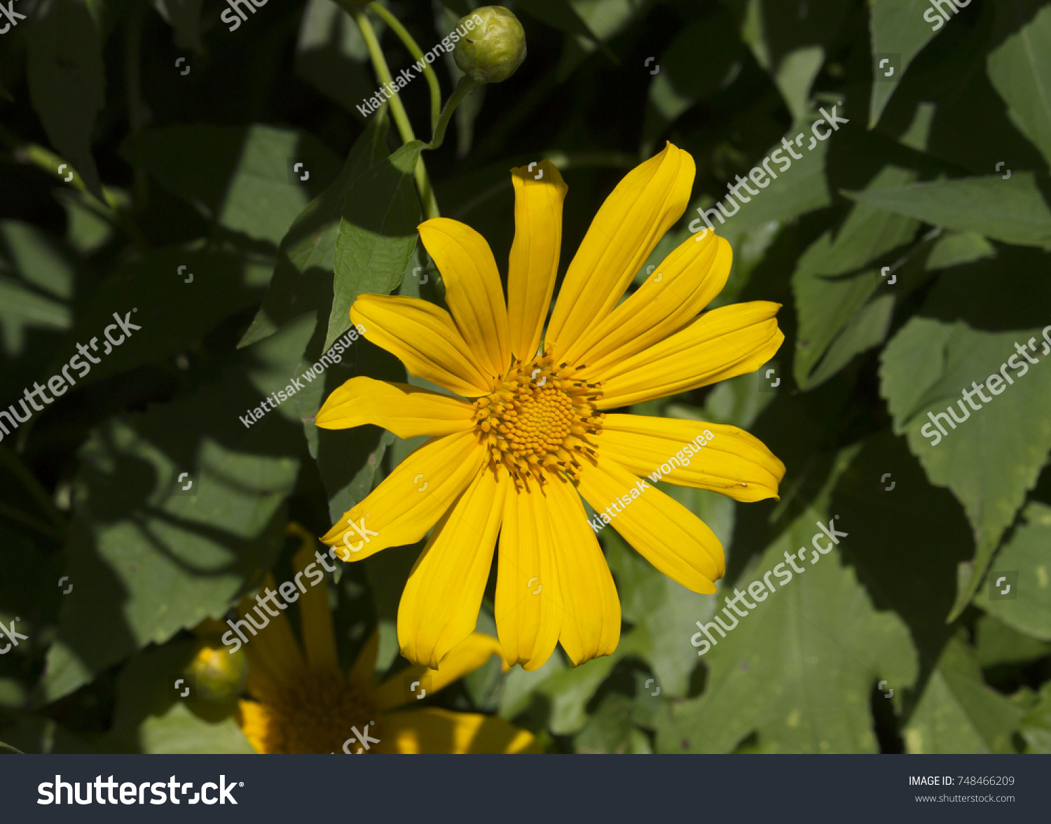 Flower Is A Beautiful Flower Another Type Of Flower Is Ornamental