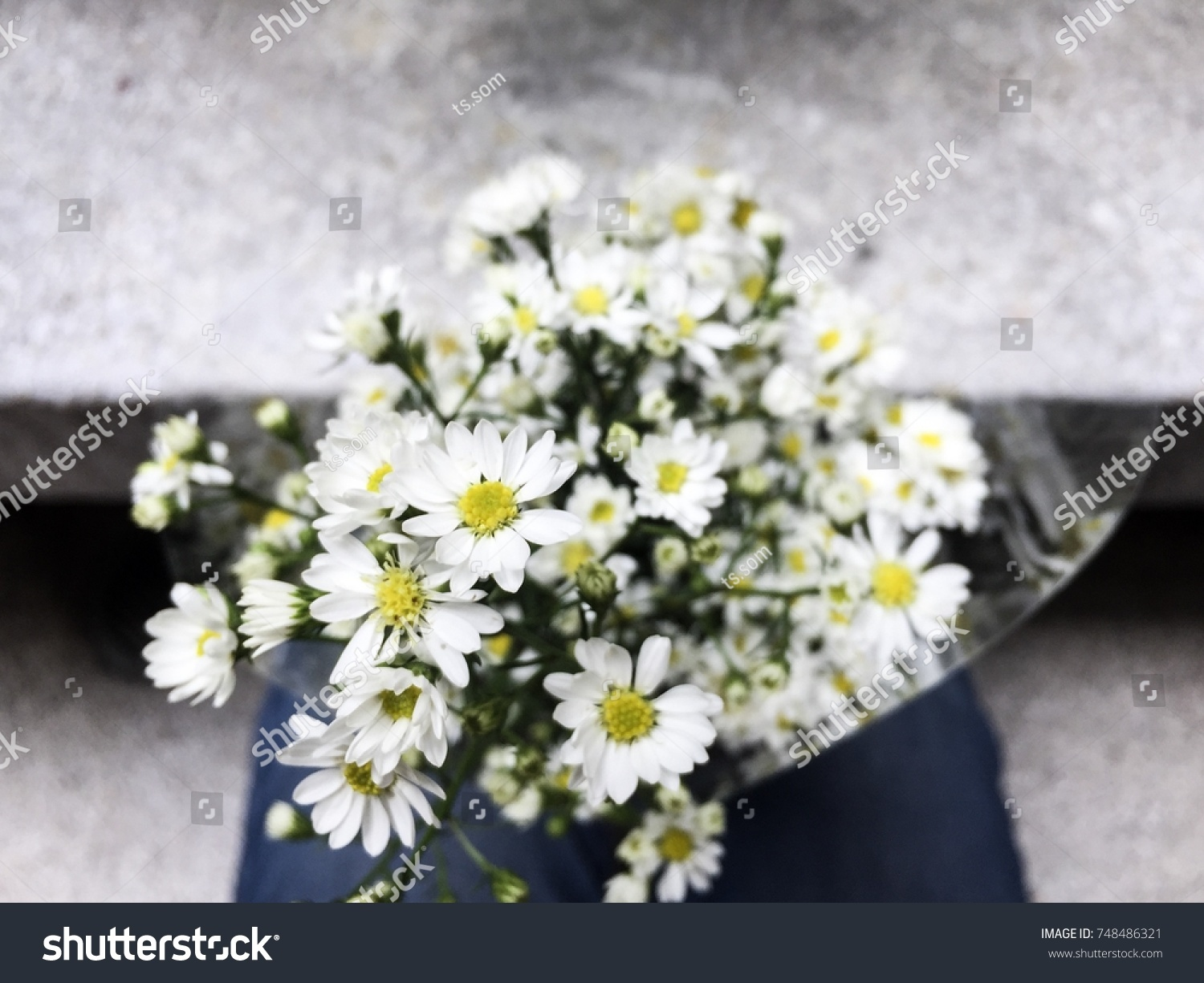 Meaning Cutter Flowers May Seem Insignificant Stock Photo Edit Now