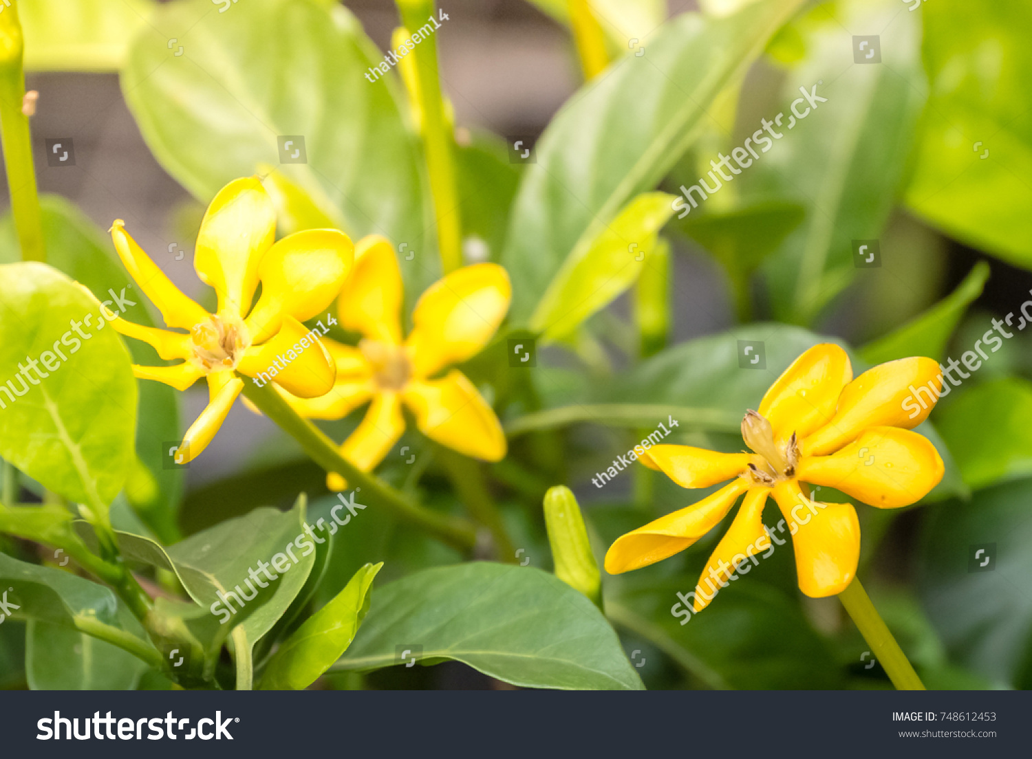 Yellow Flowers Blooming Green Leafs Name Stock Photo Edit Now