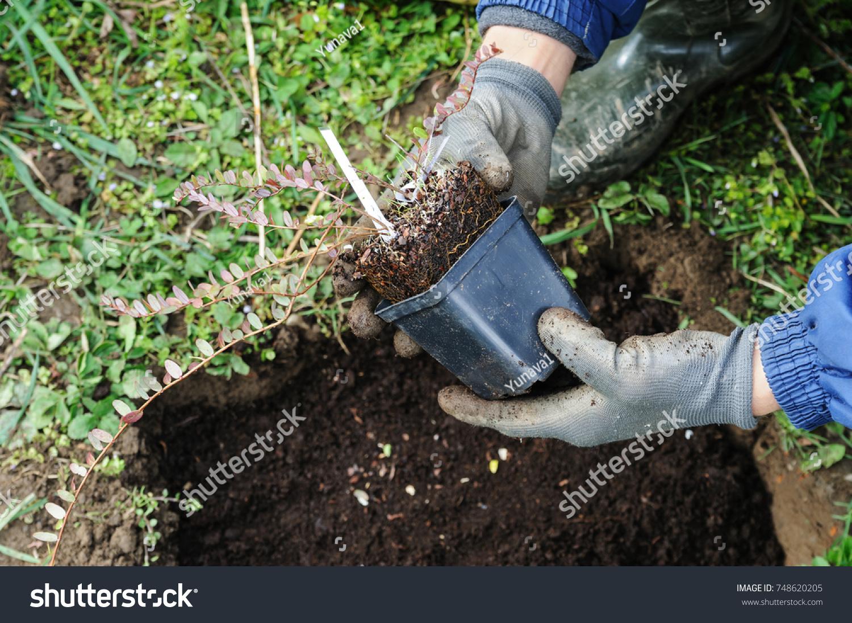 Клюква садовая : посадка и уход на дачном участке 89