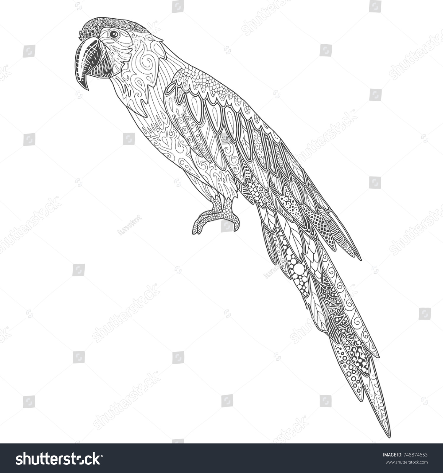Ara Parrot Cartoon Page For Adult Coloring Book Ornamental