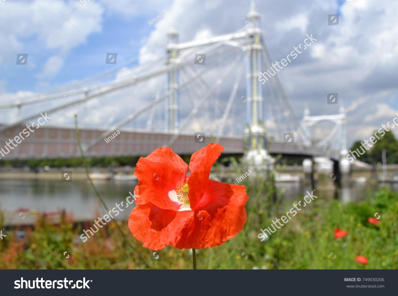 Red Poppy A Symbol World War Stock Photo Edit Now 749030206