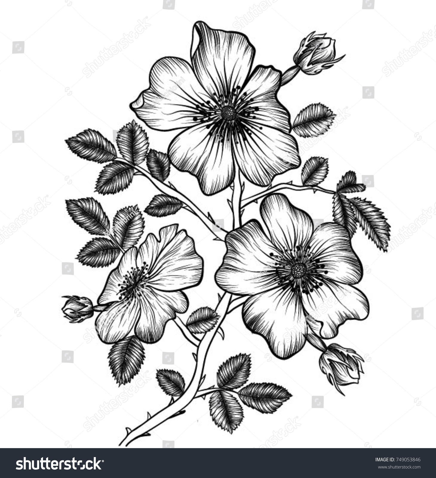 Handdrawn Wild Roses Flowers Drawing Lineart Vector Stock Vector