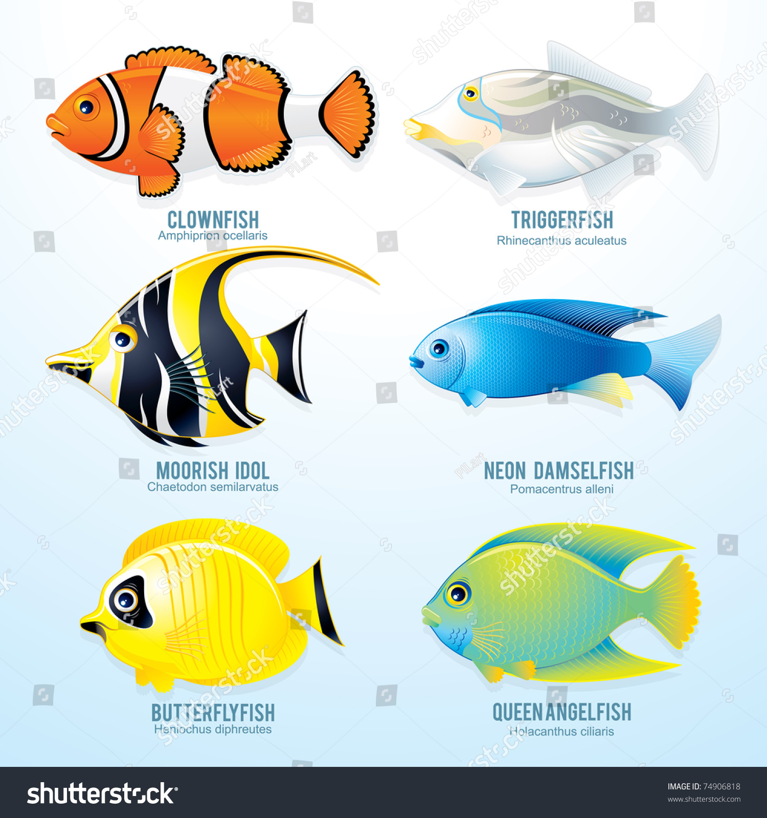 Tropical reef fish collection detailed vector stock vector for Reef tropical fish
