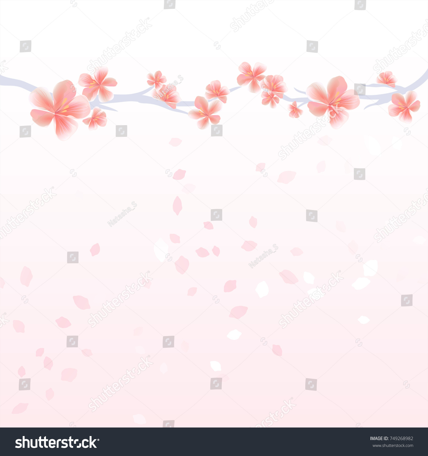 Flower Background Branches Of Sakura And Petals Flying Isolated On