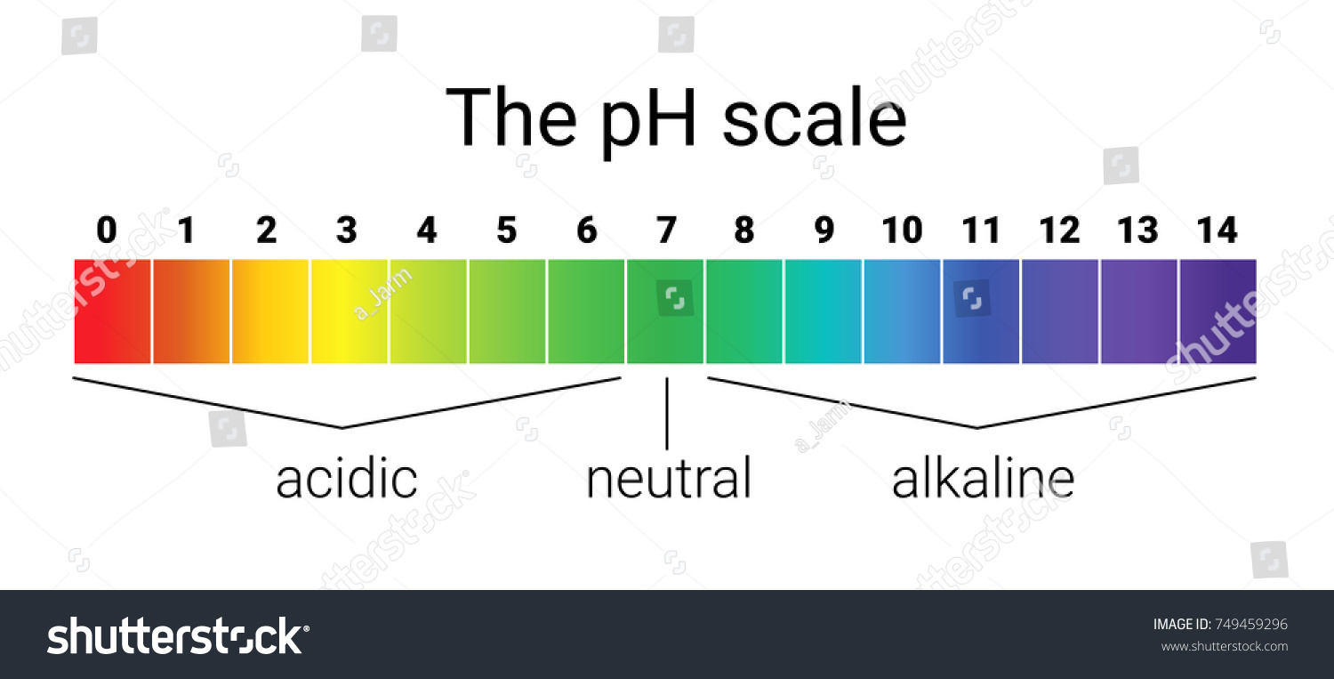 Ph Scale Infographic Acidbase Balance Scale Stock Vector 749459296 ... for Ph Scale Acids And Bases  183qdu