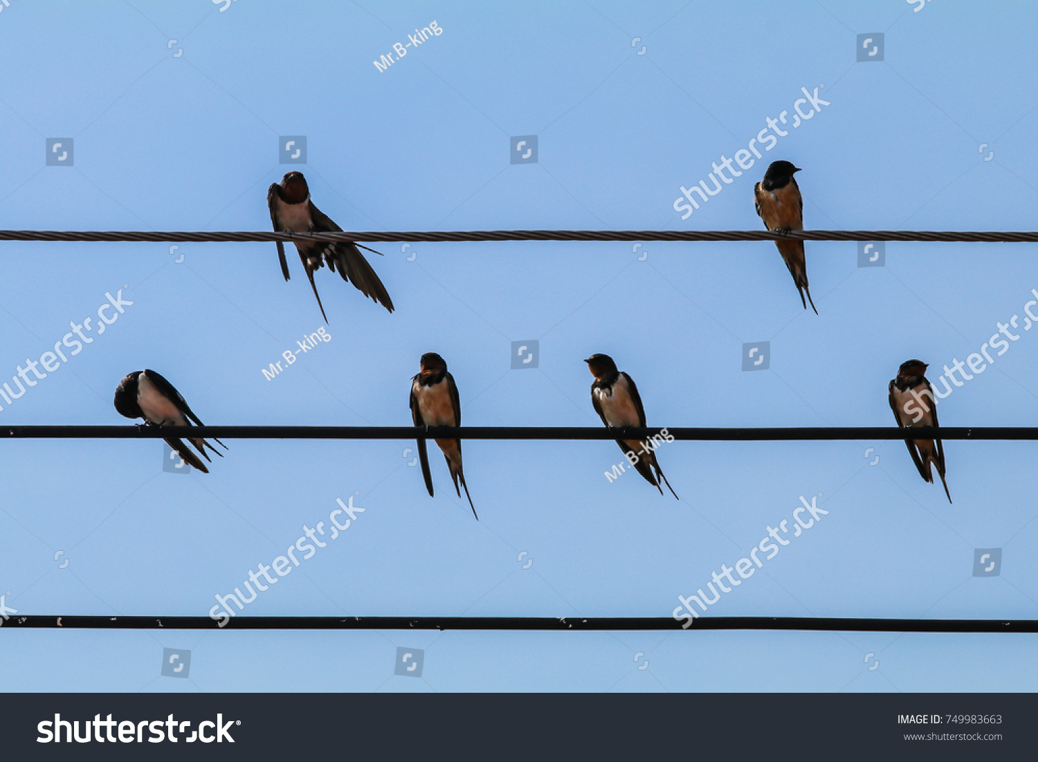 Close Flock Barn Swallow Birds Sitting Stock Photo (Edit Now ...