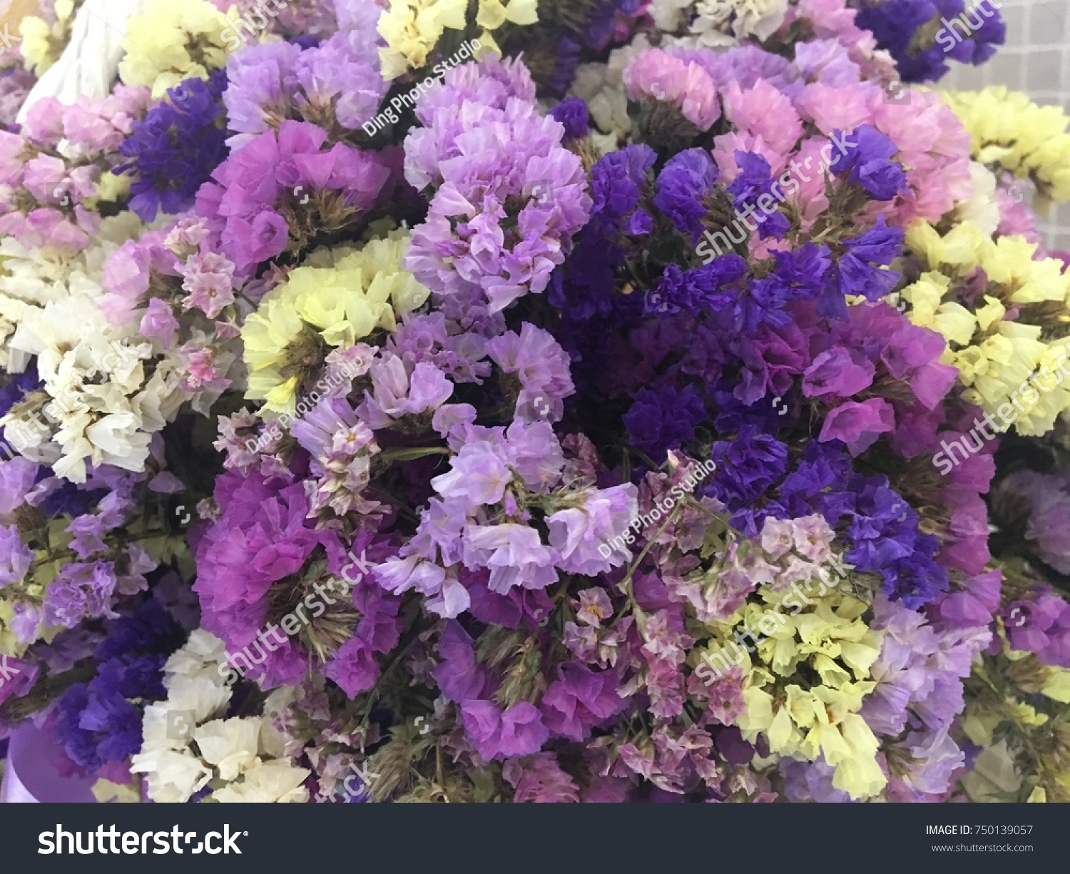 Statice flowers yellow pink purple statice is also considered an id 750139057 mightylinksfo