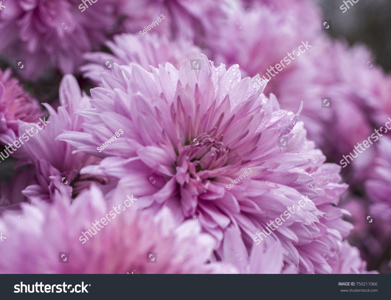 Autumn Flowers Ez Canvas