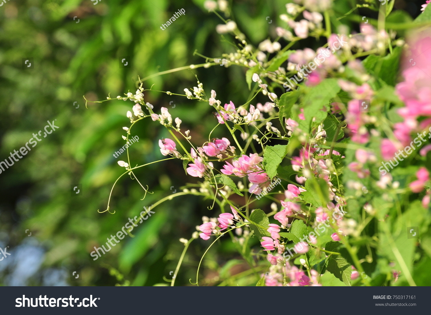 Beautiful Flowers And Grass In Nature On A Sunny Day Pink Flowers