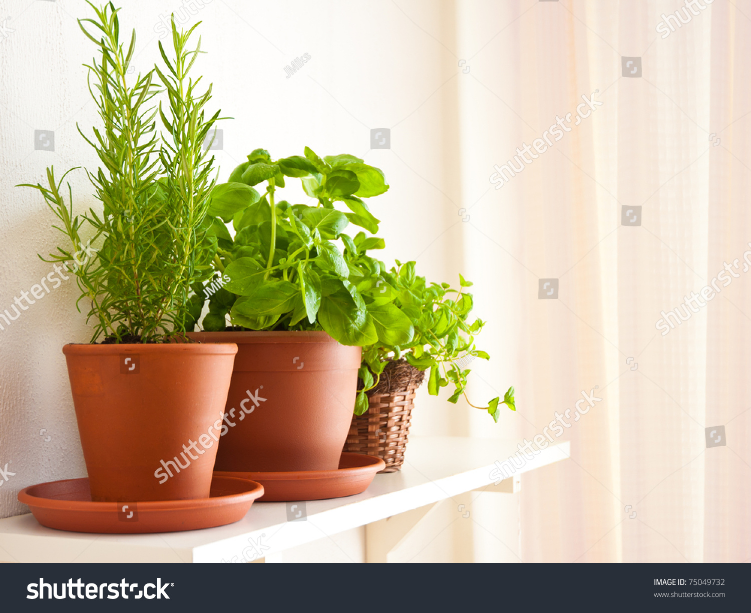 Three pots of herbs rosemary basil and mint stock photo 75049732 shutterstock - Aromatic herbs pots multiple benefits ...