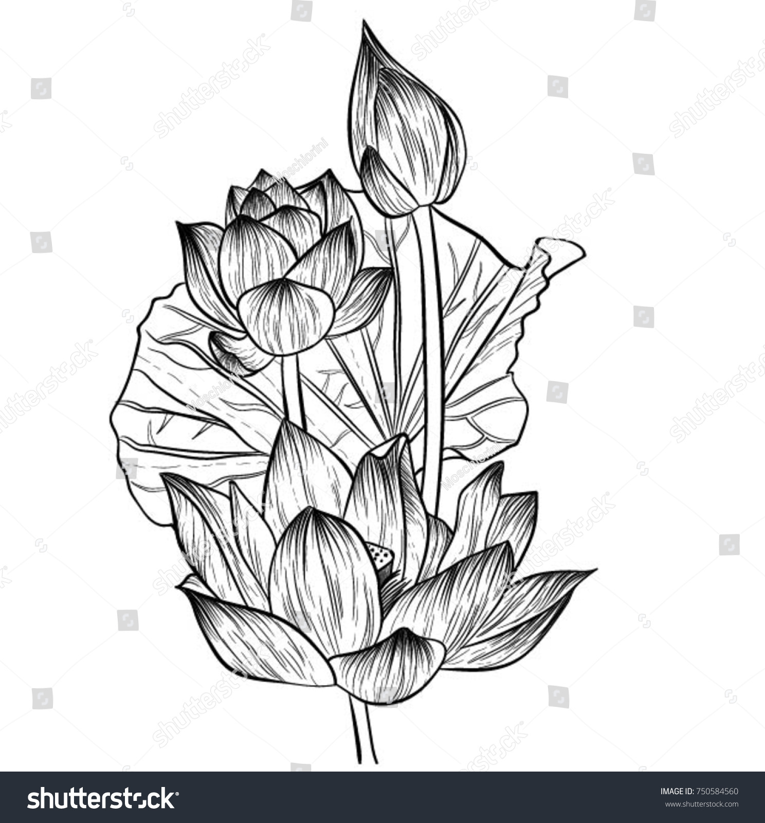 Handdrawn water lily flowers drawing lineart vector stock vector hand drawn water lily flowers drawing line artctor illustration and clip izmirmasajfo