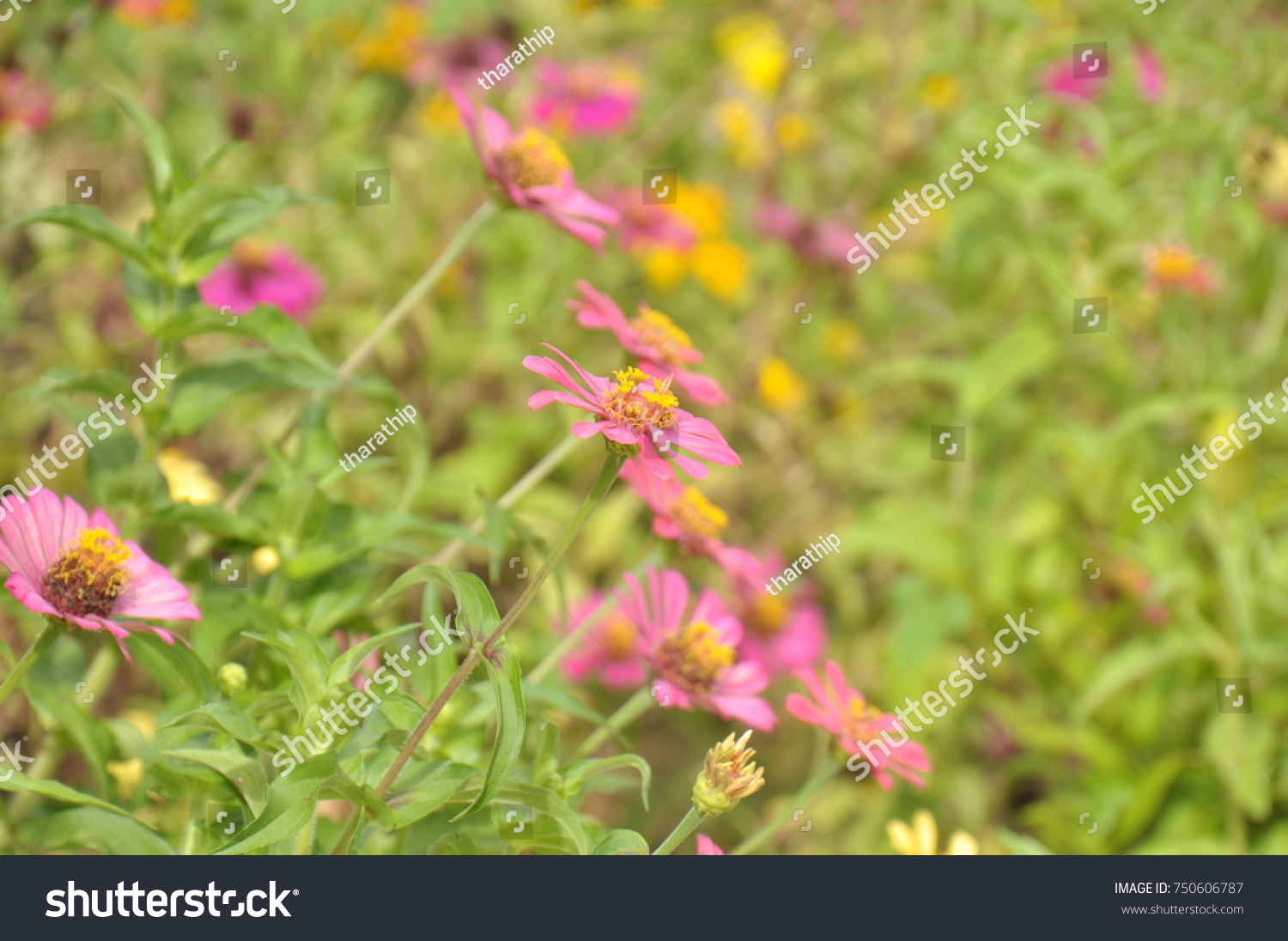 Grass and grass flowers background beautiful flowers and grass in id 750606787 izmirmasajfo