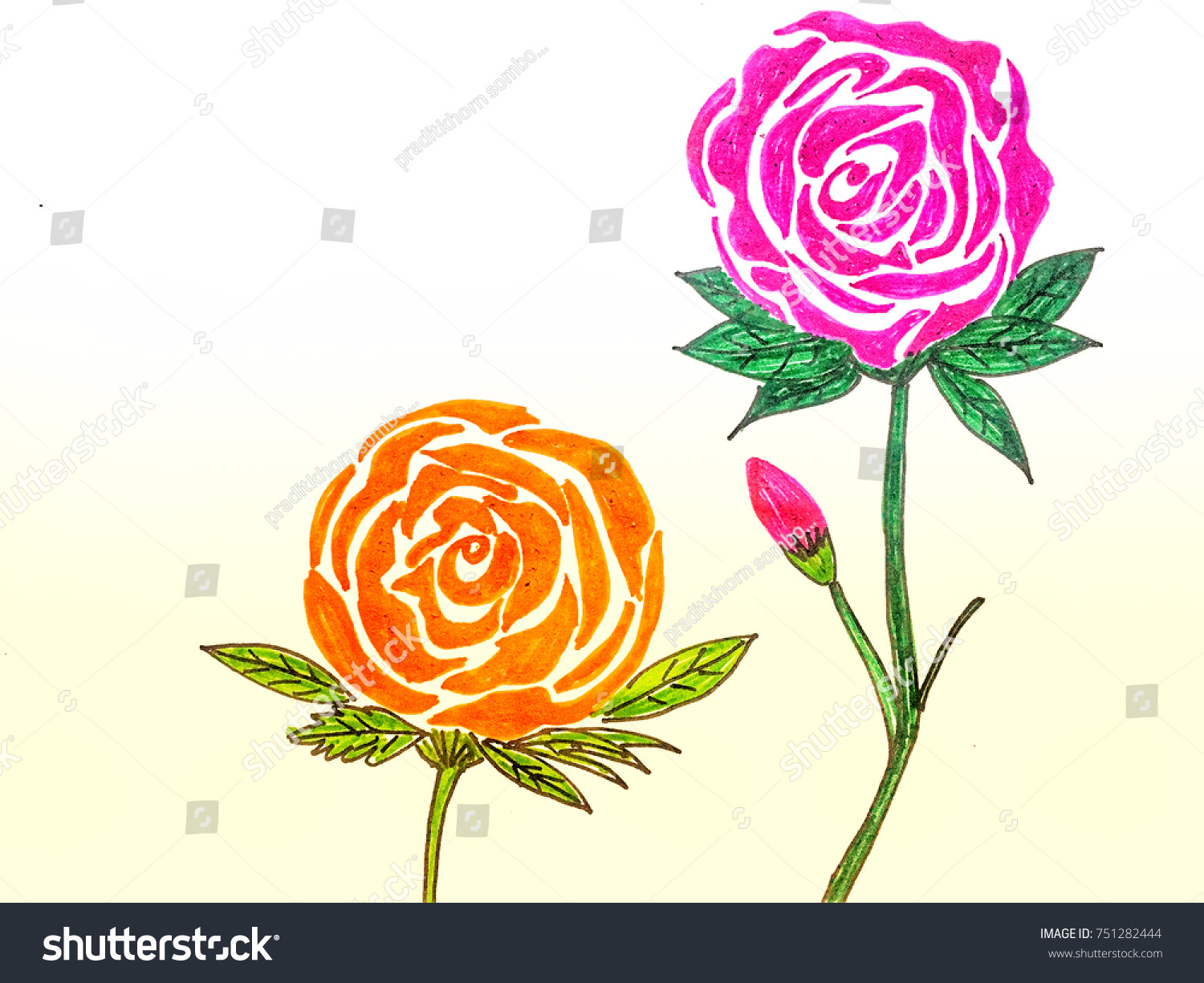 Line Drawing Of Rose Plant : Beautiful rose flower blossom line drawing stock illustration
