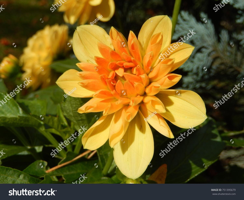 Very beautiful flowers ez canvas izmirmasajfo