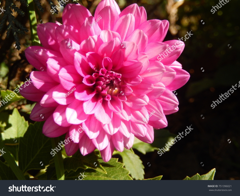 Very beautiful flowers stock photo 751396021 shutterstock very beautiful flowers izmirmasajfo
