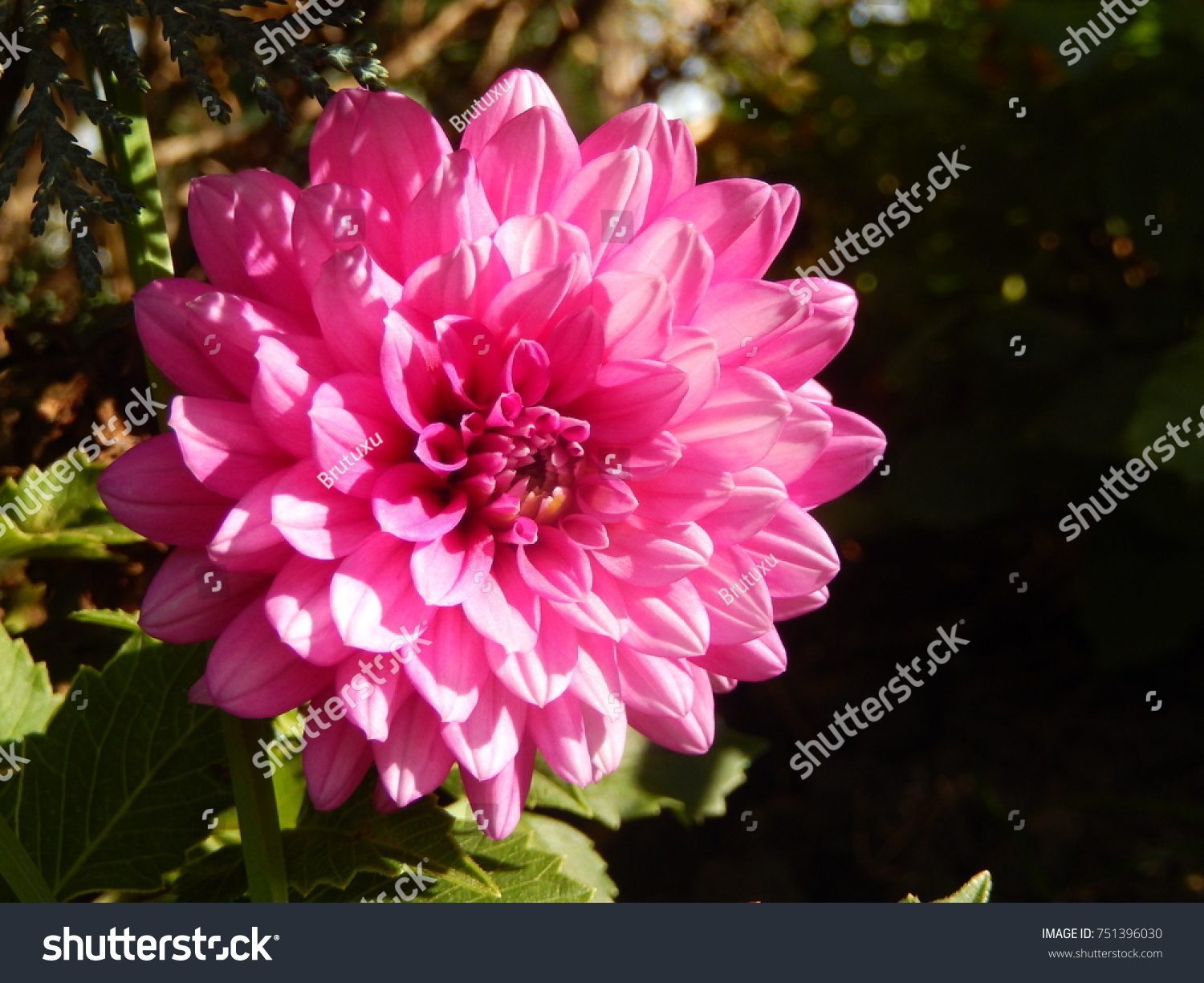 Very beautiful flowers stock photo royalty free 751396030 very beautiful flowers izmirmasajfo