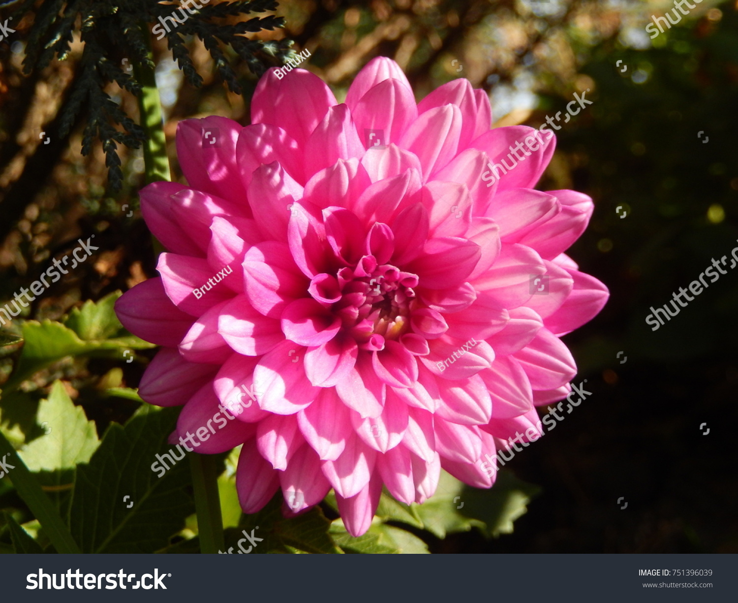 Very beautiful flowers stock photo royalty free 751396039 very beautiful flowers izmirmasajfo