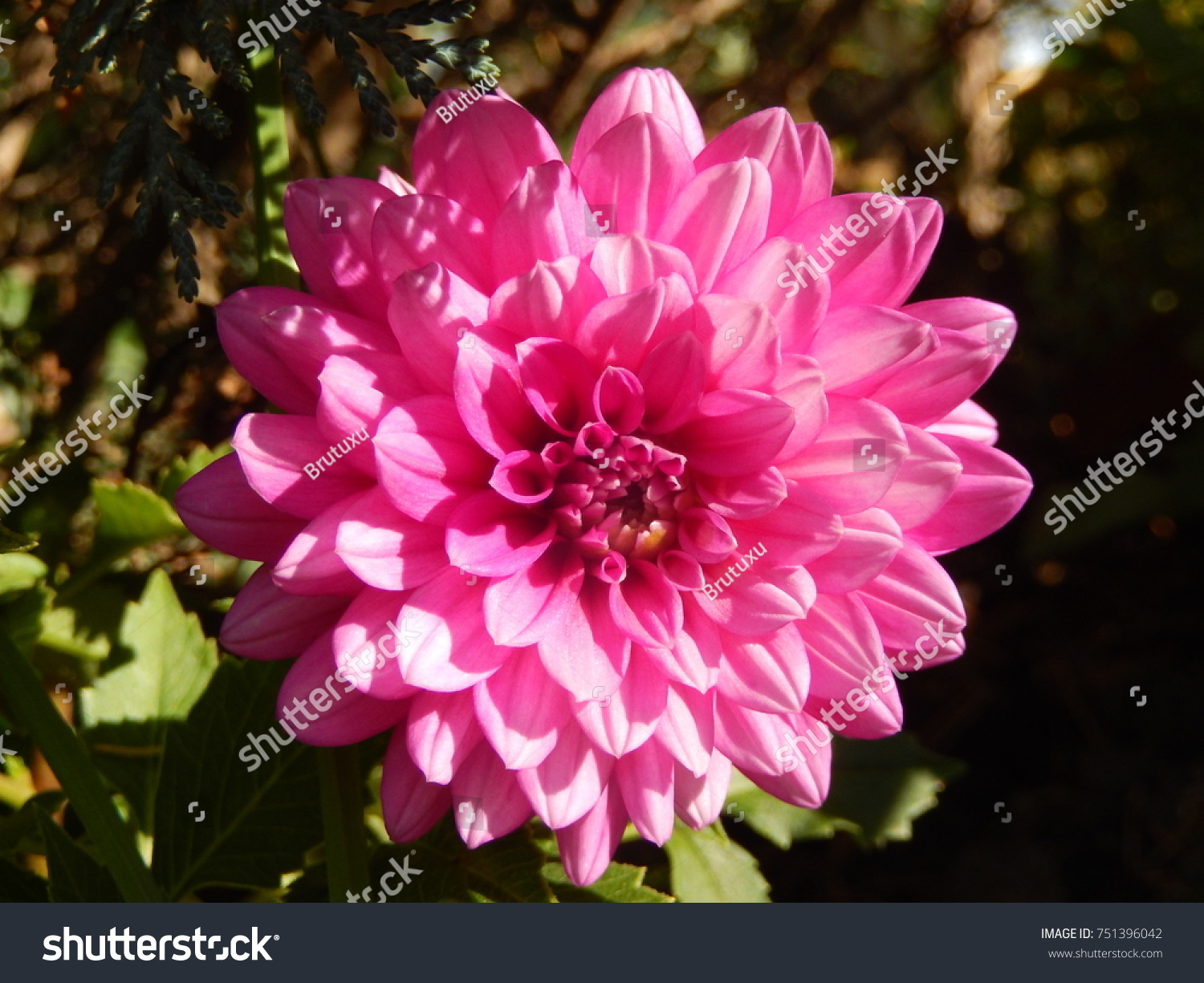 Very beautiful flowers stock photo edit now 751396042 shutterstock very beautiful flowers izmirmasajfo