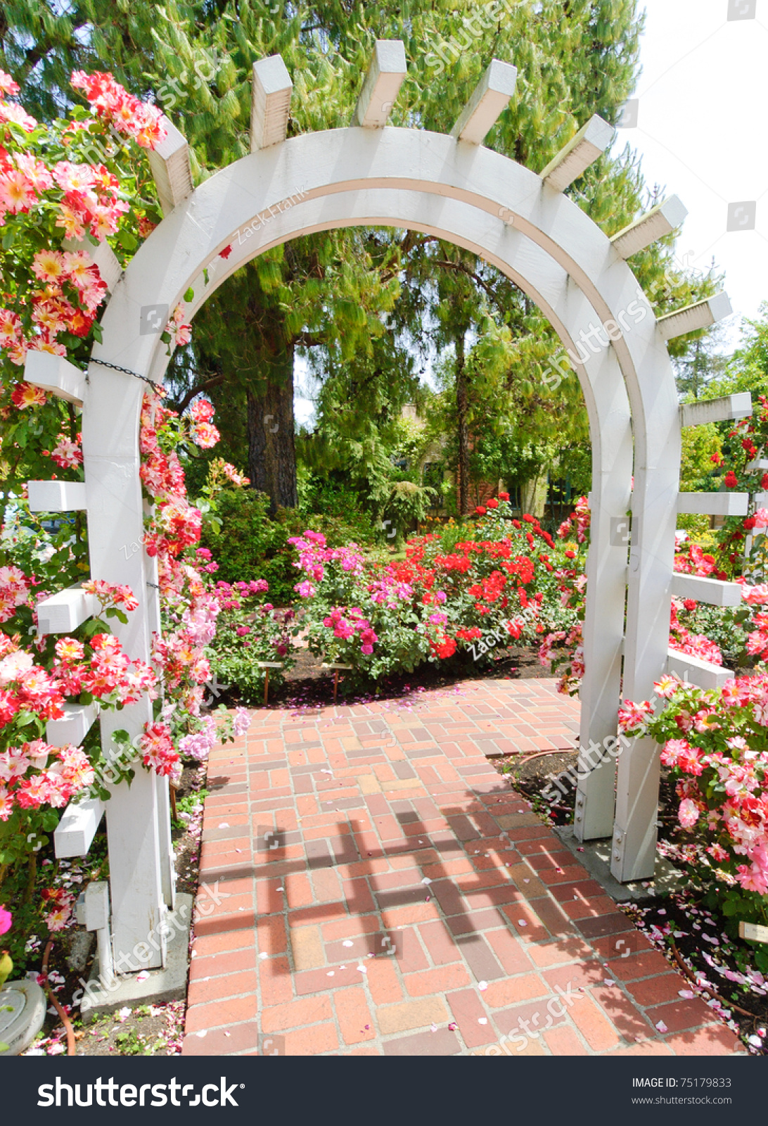 Wooden Garden Arch Pink Flower Garden Stock Photo 75179833