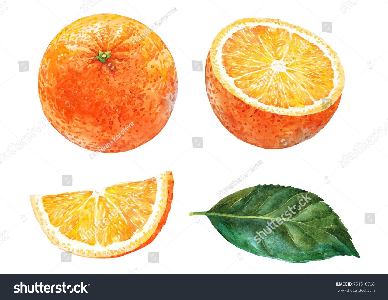 orange slice orange leaf watercolorのイラスト素材 751816708