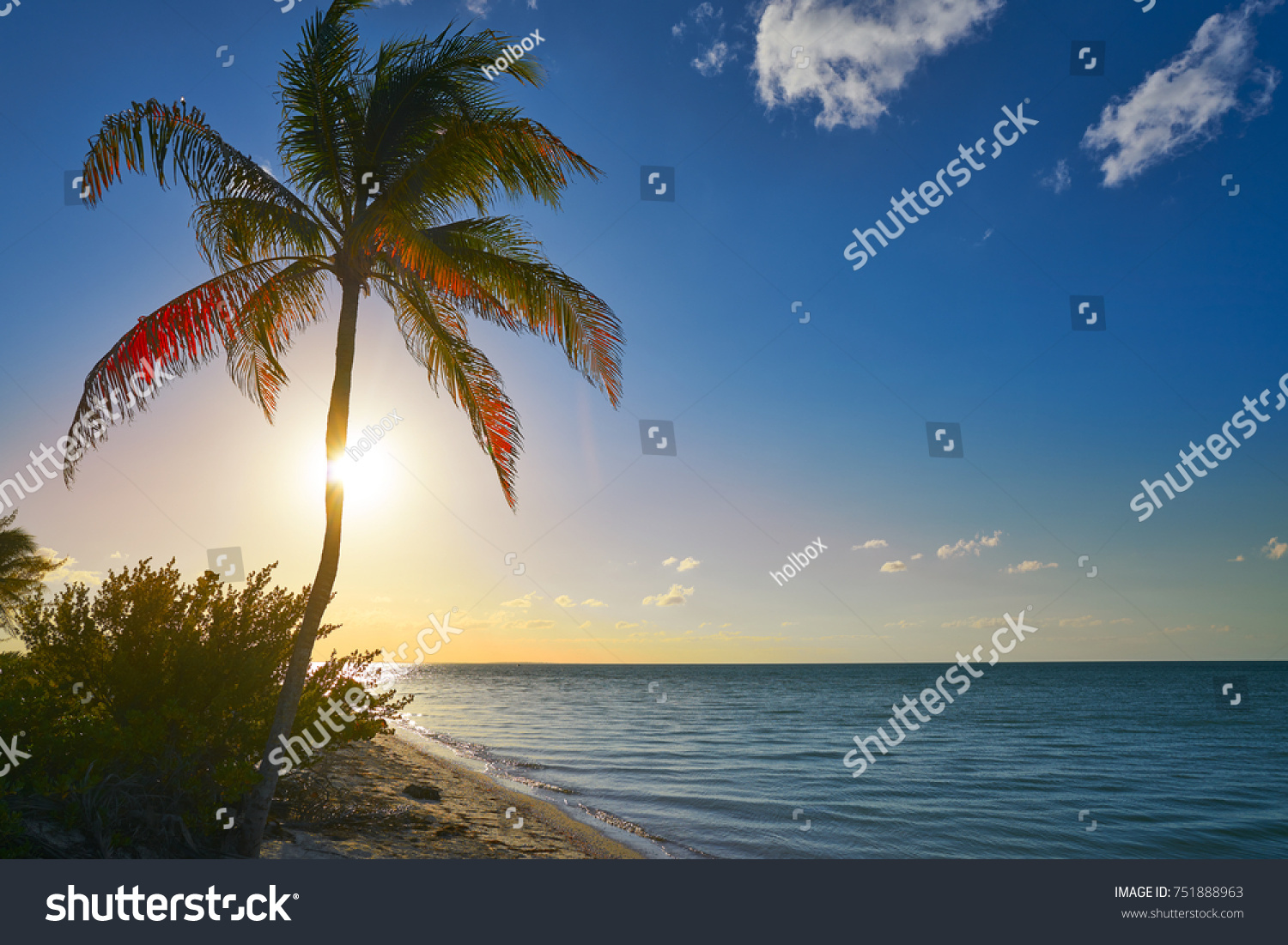 Holbox Island Sunset Beach Palm Tree Tropical In Mexico